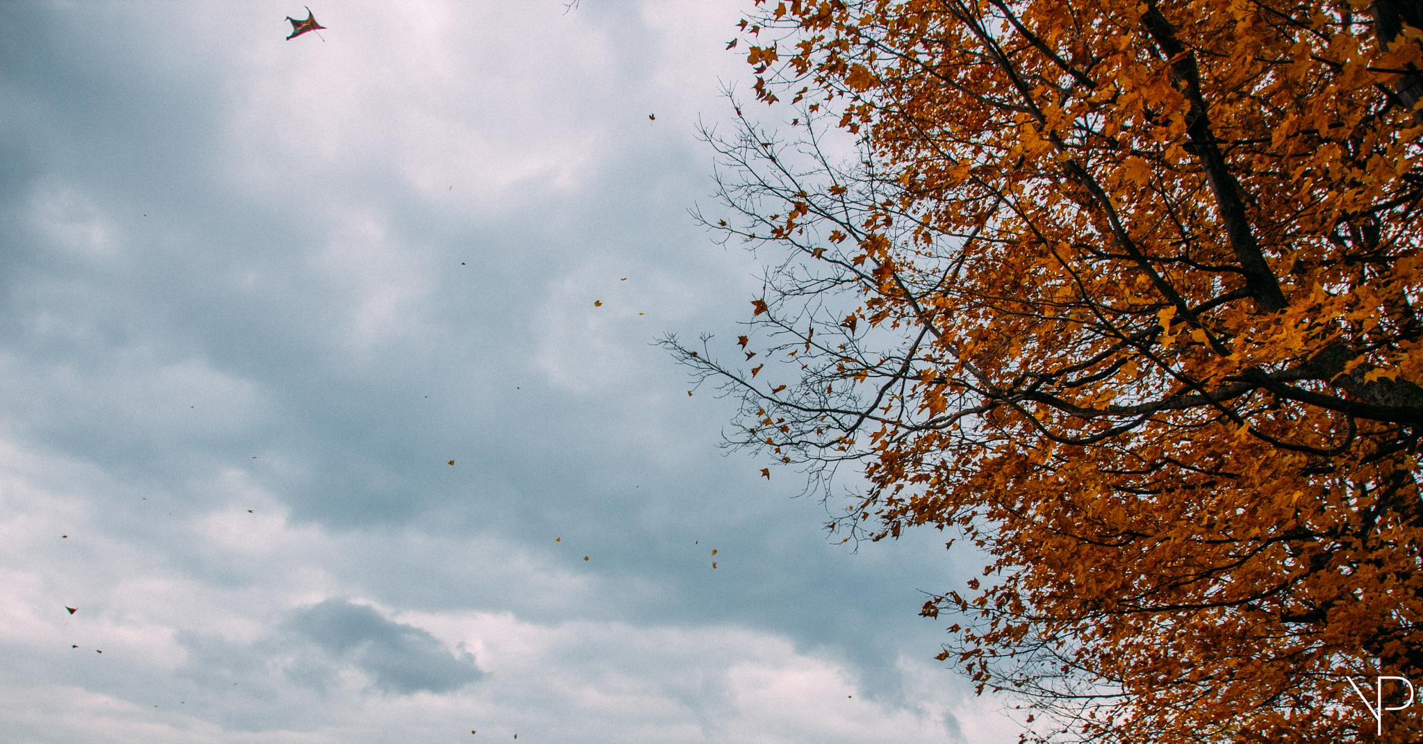 Photo in Nature #fall #automne #cloud #sky #wind #windy #leaf #leaves #tree #trees #quebec #canada #branch #orange #nature #landscape #abstract