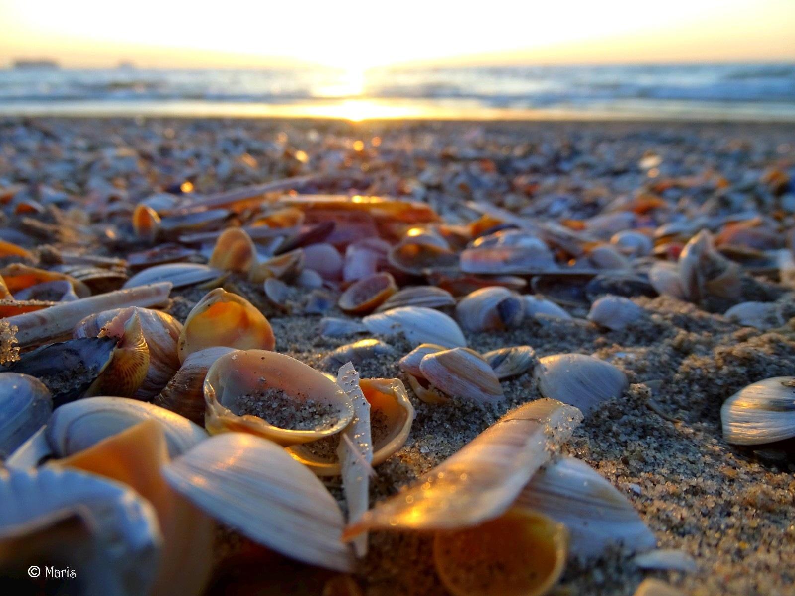 Shells by mariska.dejong