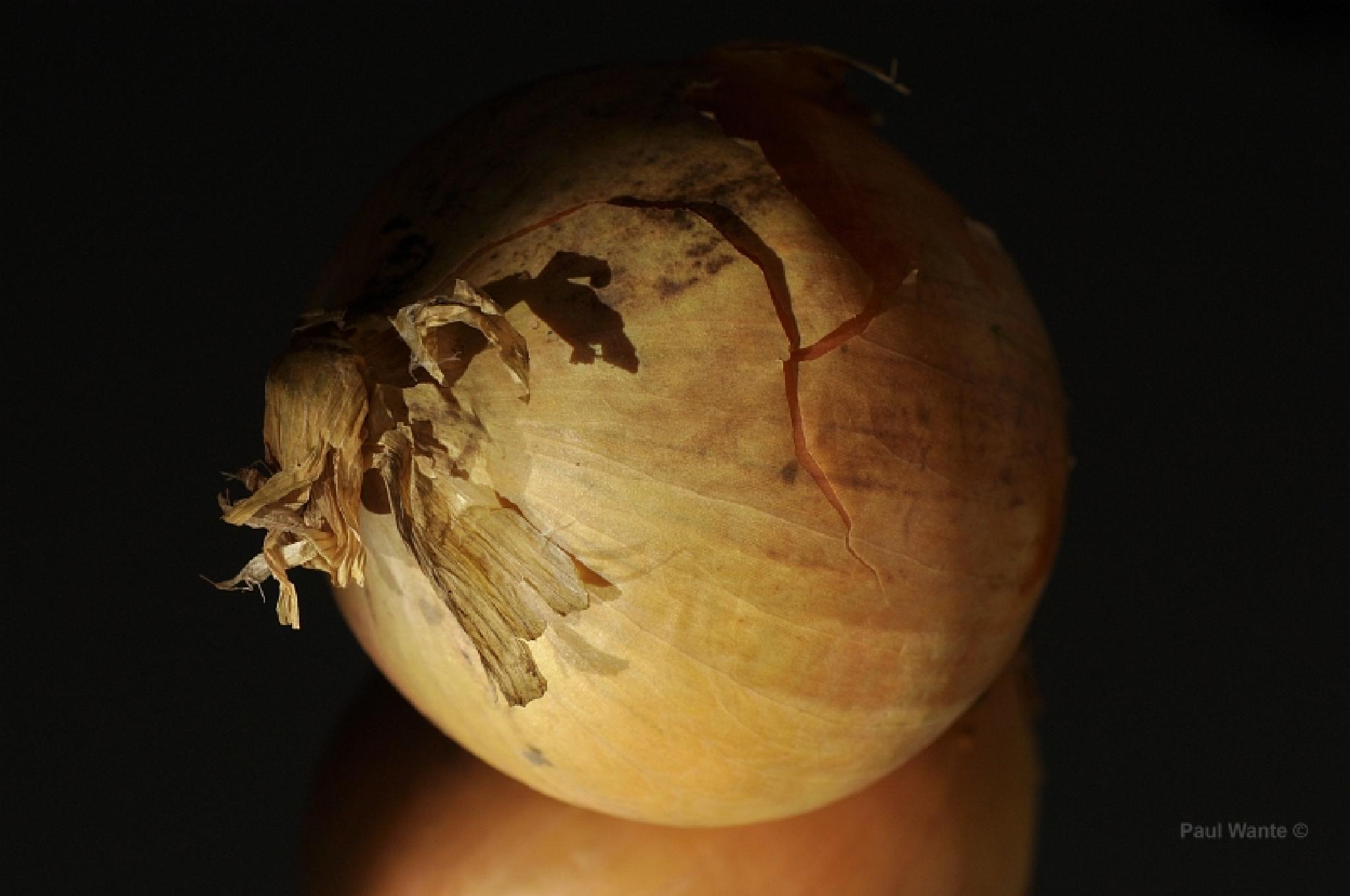 onion by paul wante