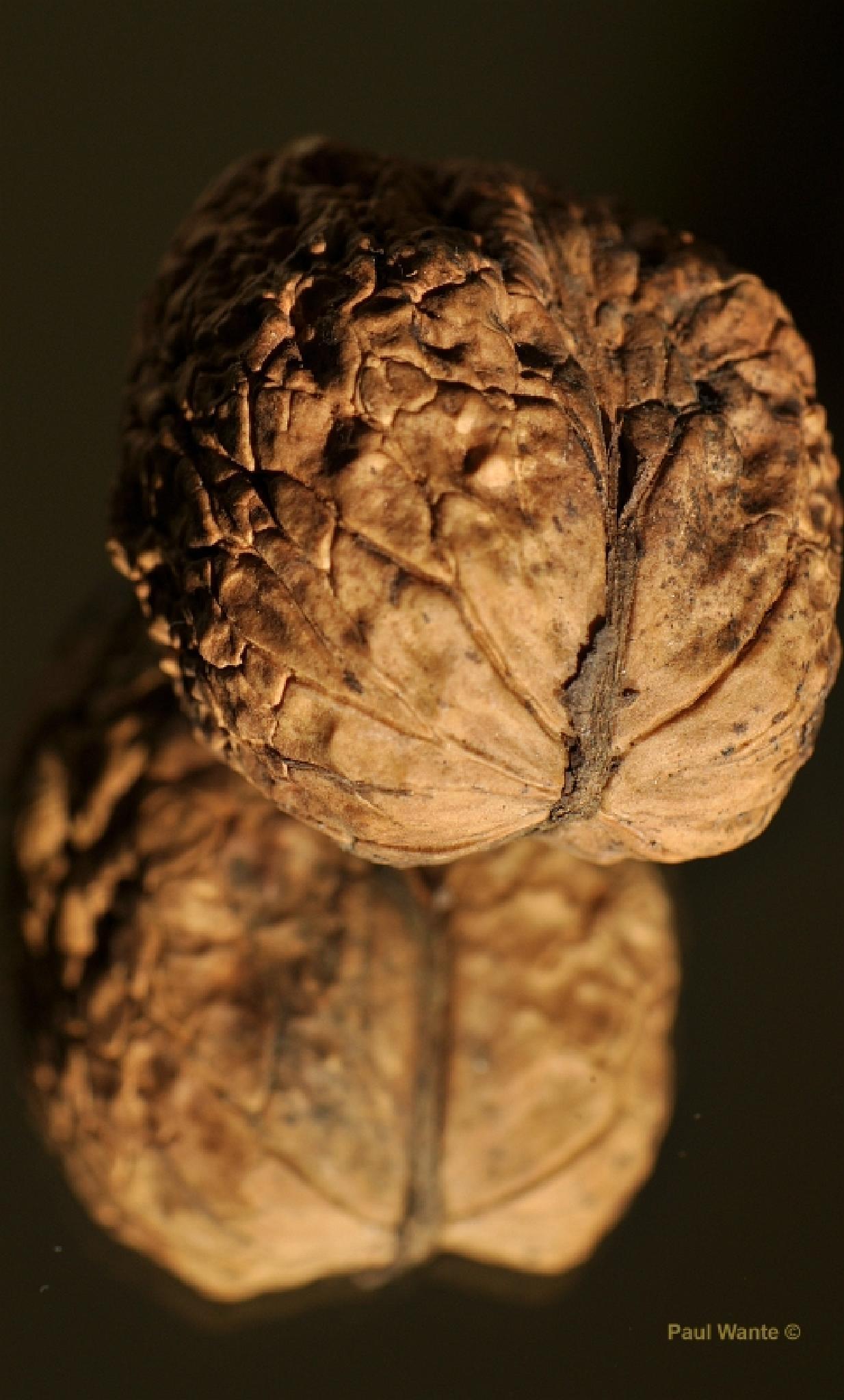twin nut by paul wante