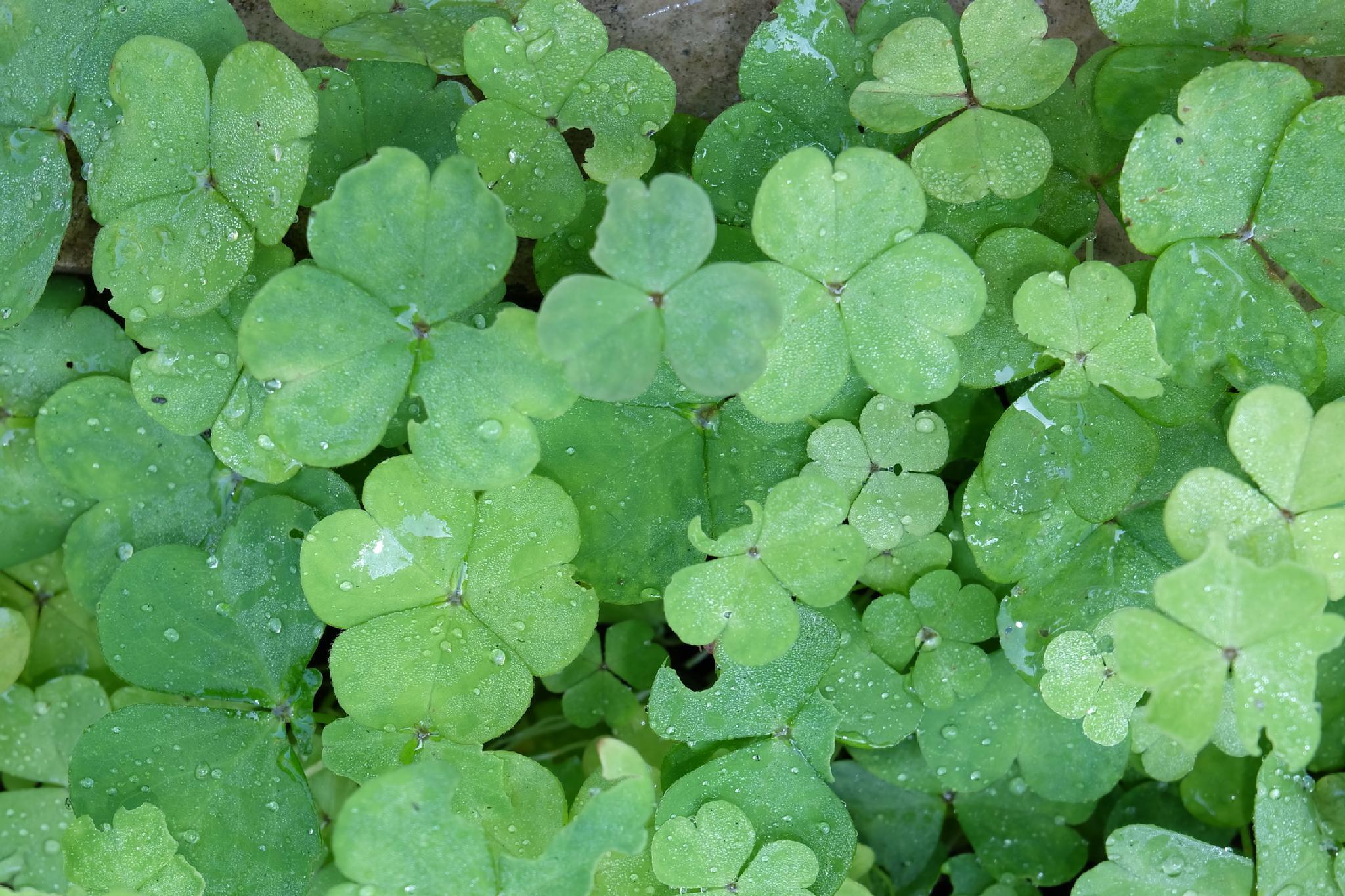 green dreams by yashar.sepahi