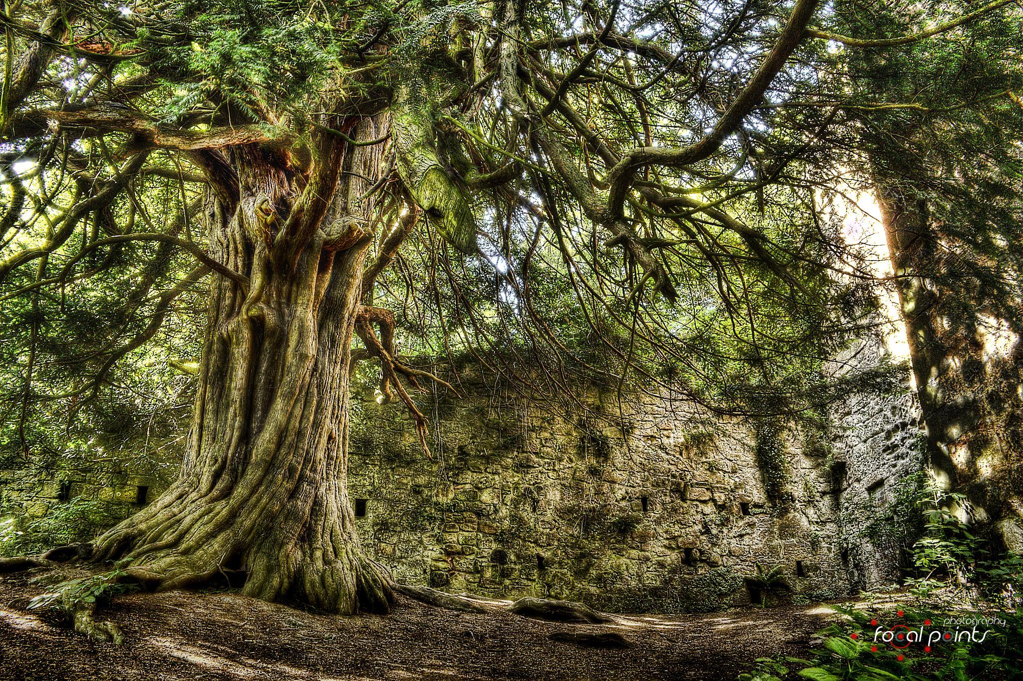 Photo in Landscape #old #tree #building #castle #stone #hdr #scotland #landscape