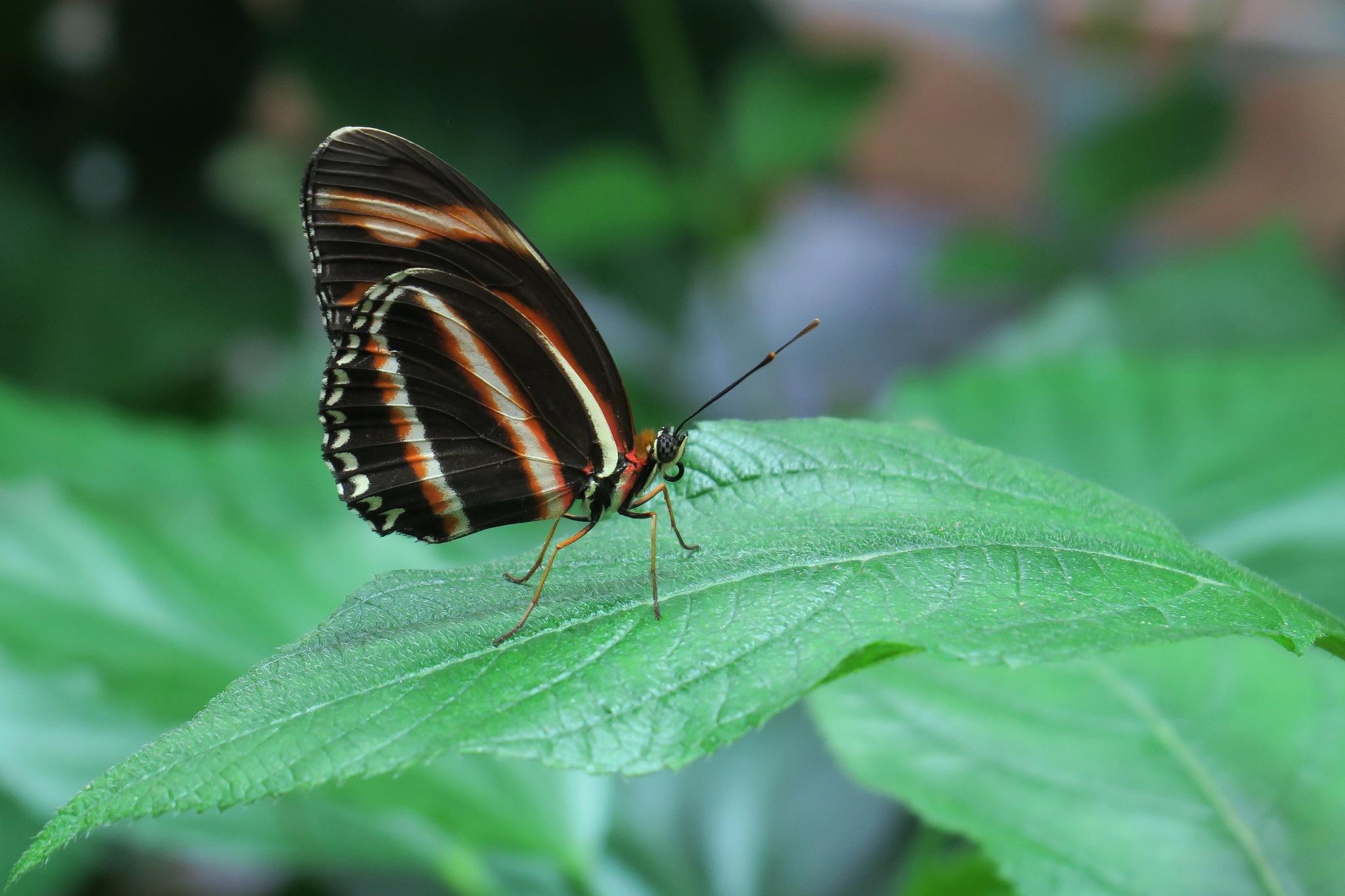 butterfly by Ralf Muhl