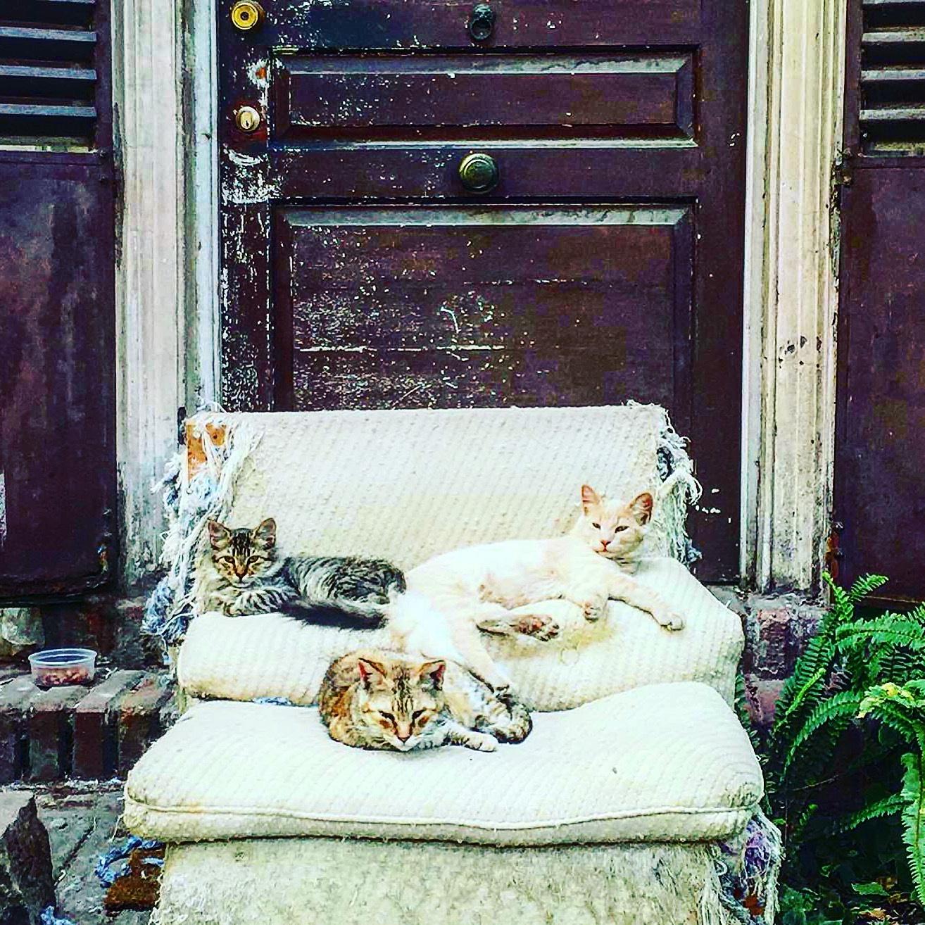 Cats by gabriela goñi