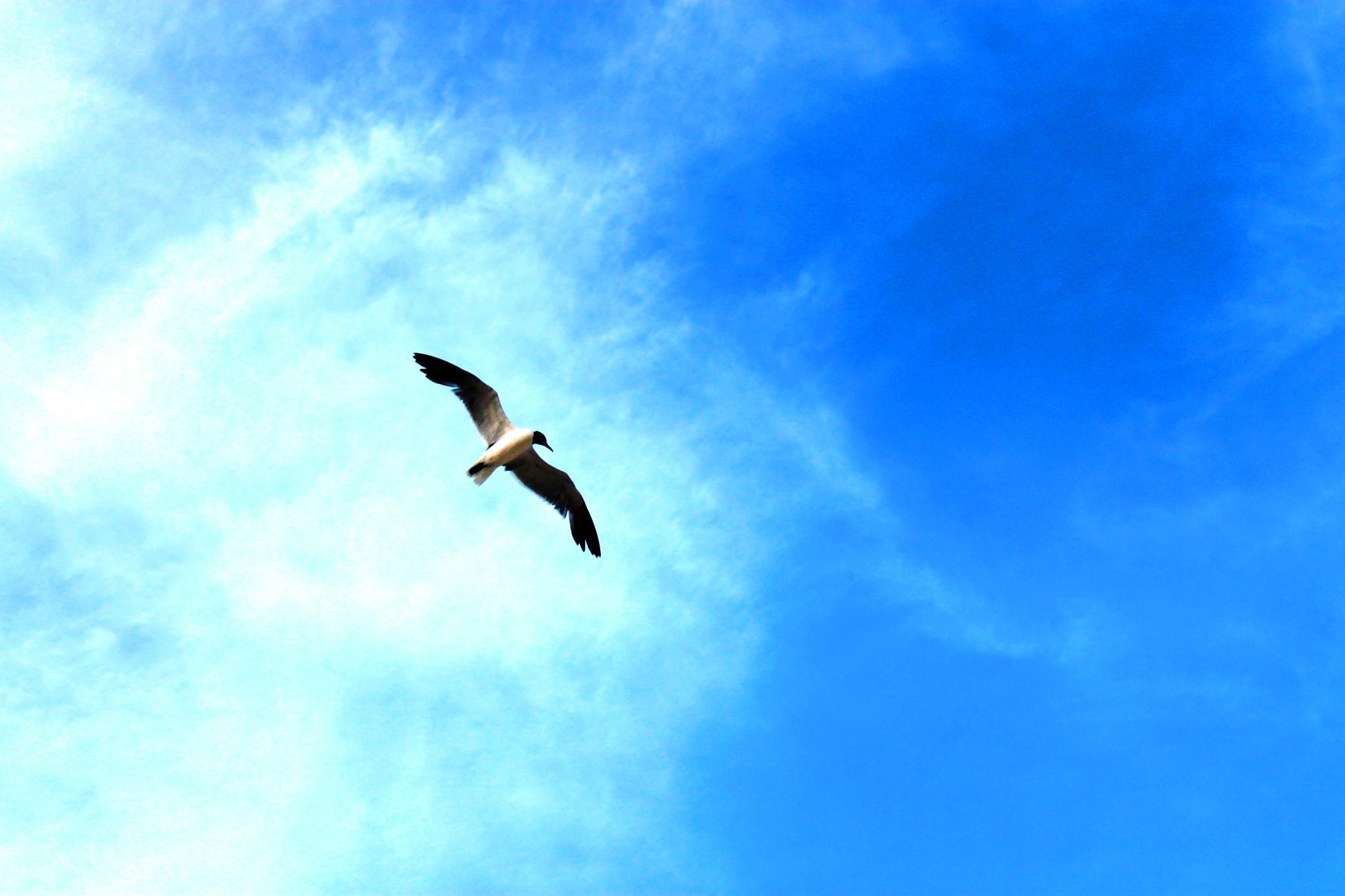 Sky is the limit by gabriela goñi