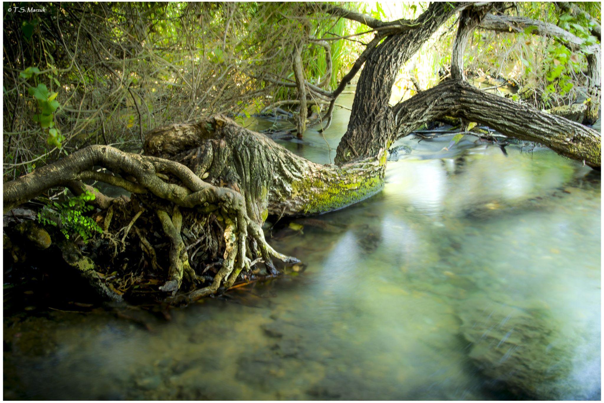 The Lagun by Tal-Shahar Marzuk