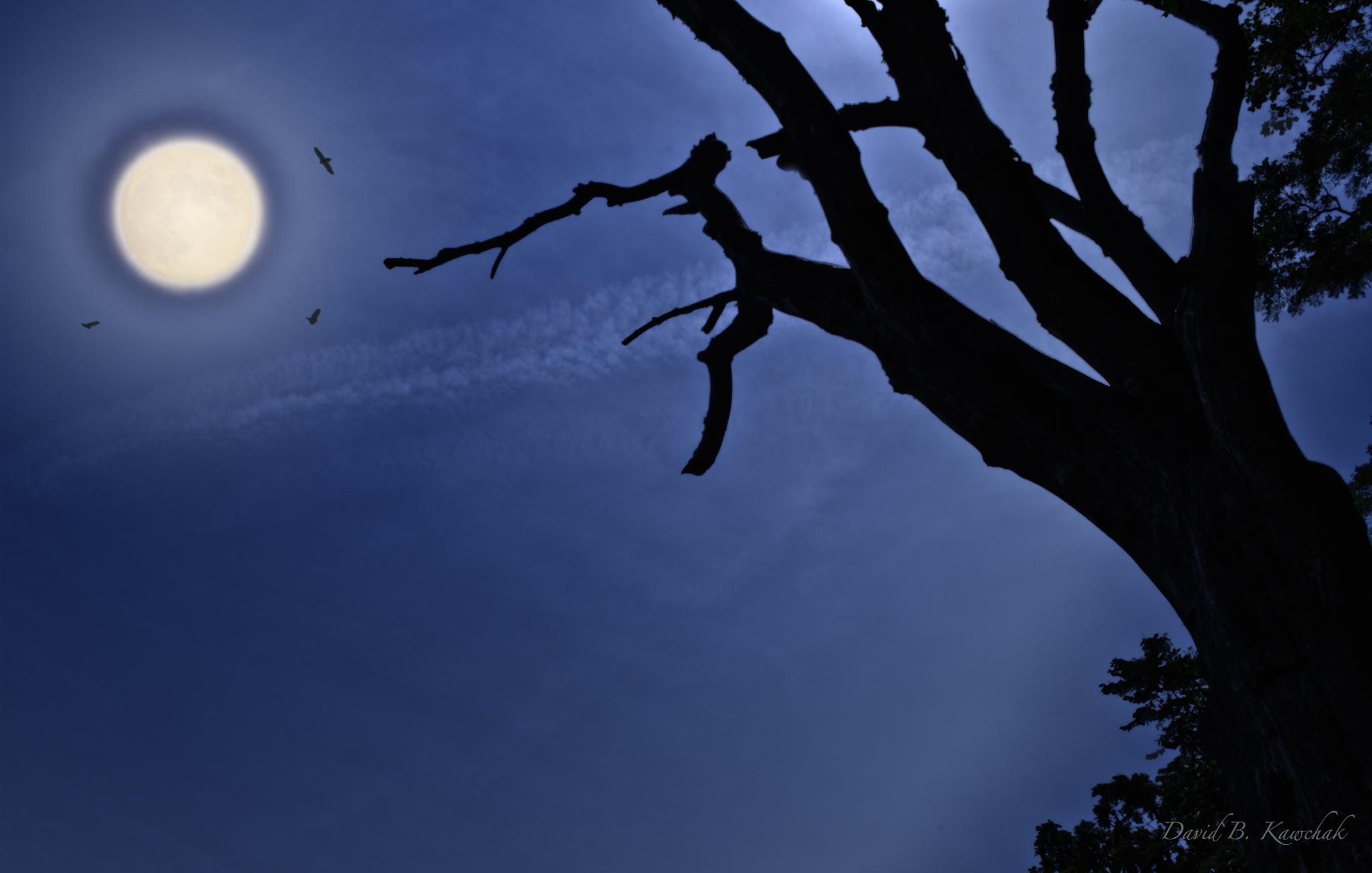 Silvery Moon by davidbrucekawchak