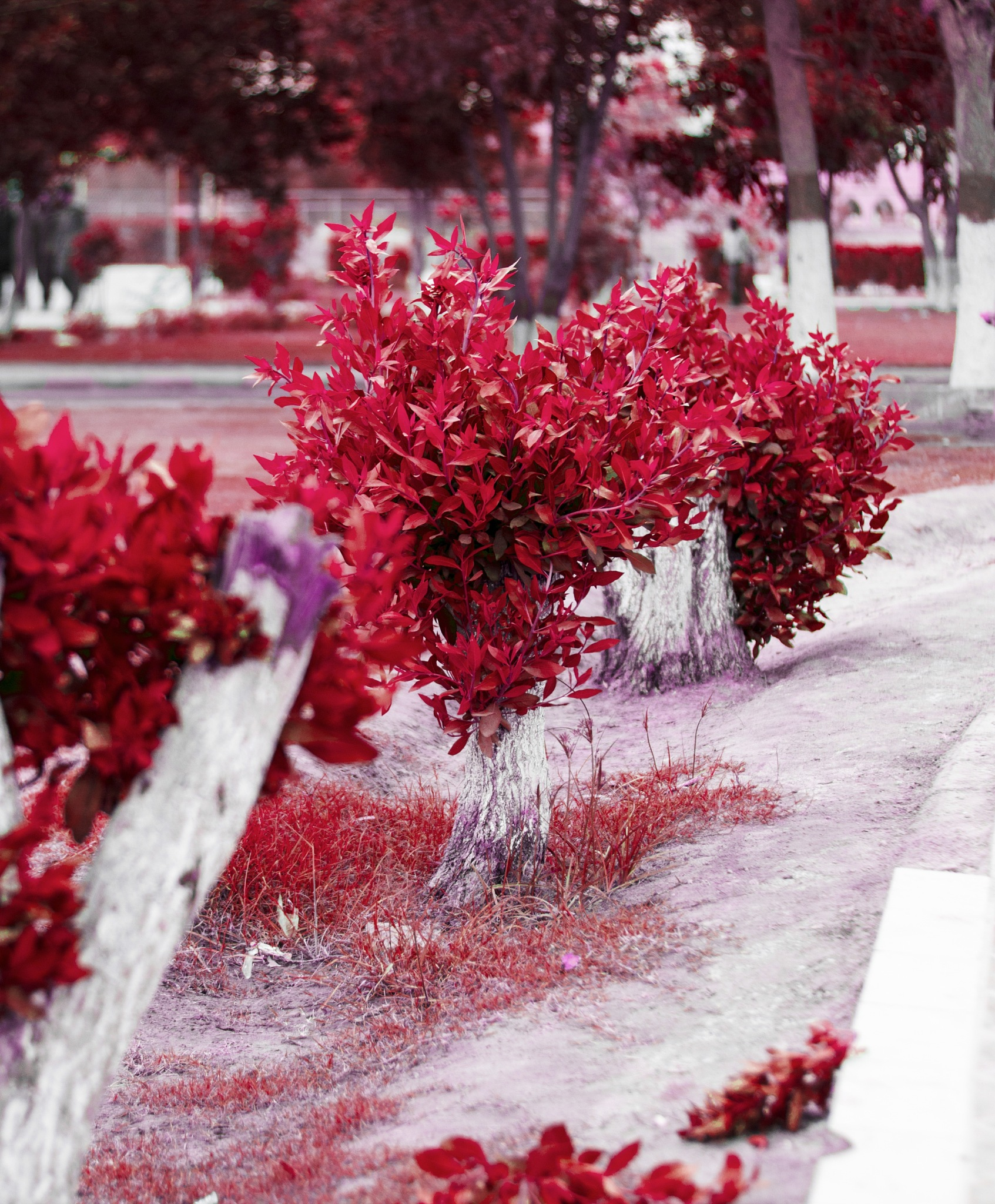 Fine Art Photography. enhancement of red where you don't see it by Hassan Khan