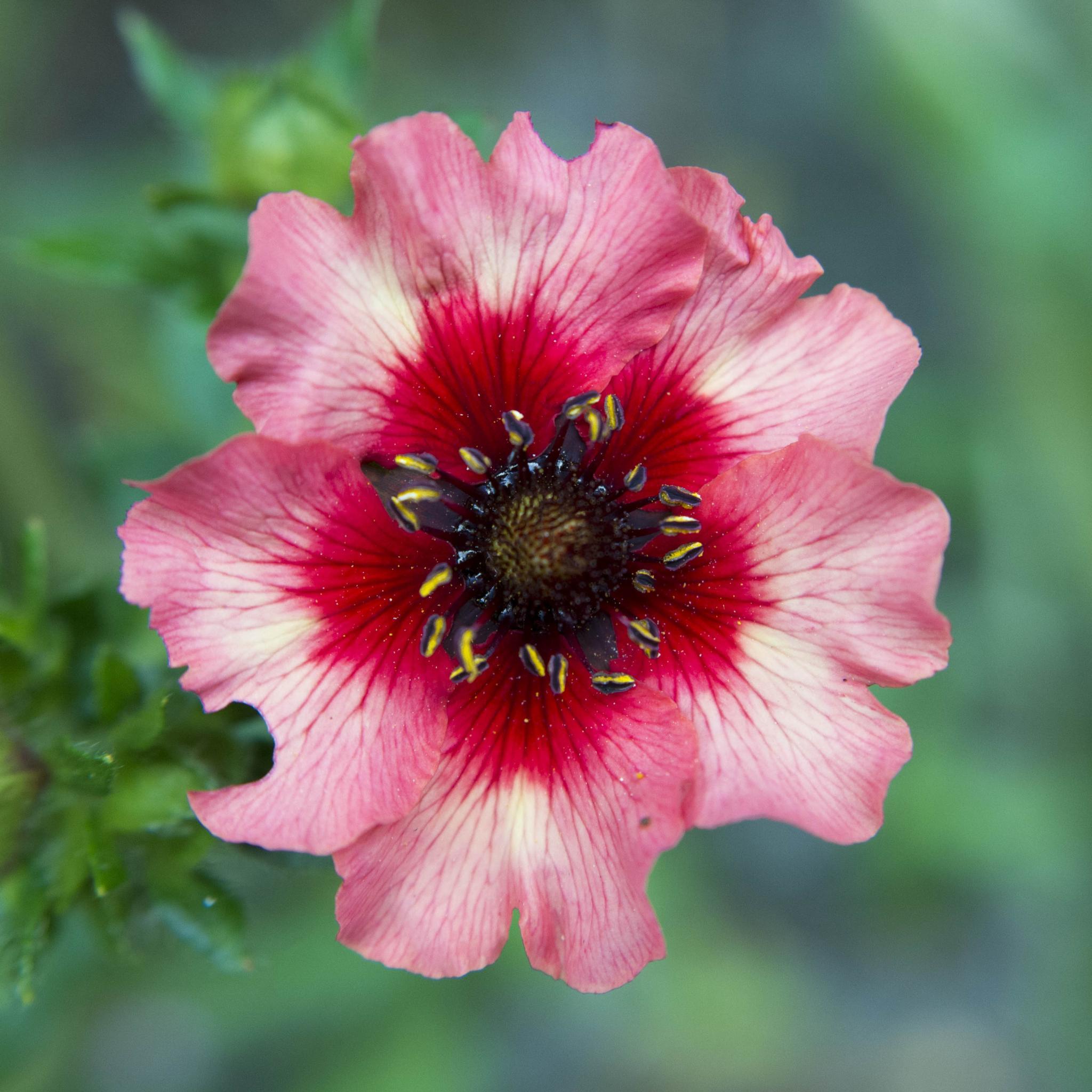 Jaggy Flower by Sean Thompson