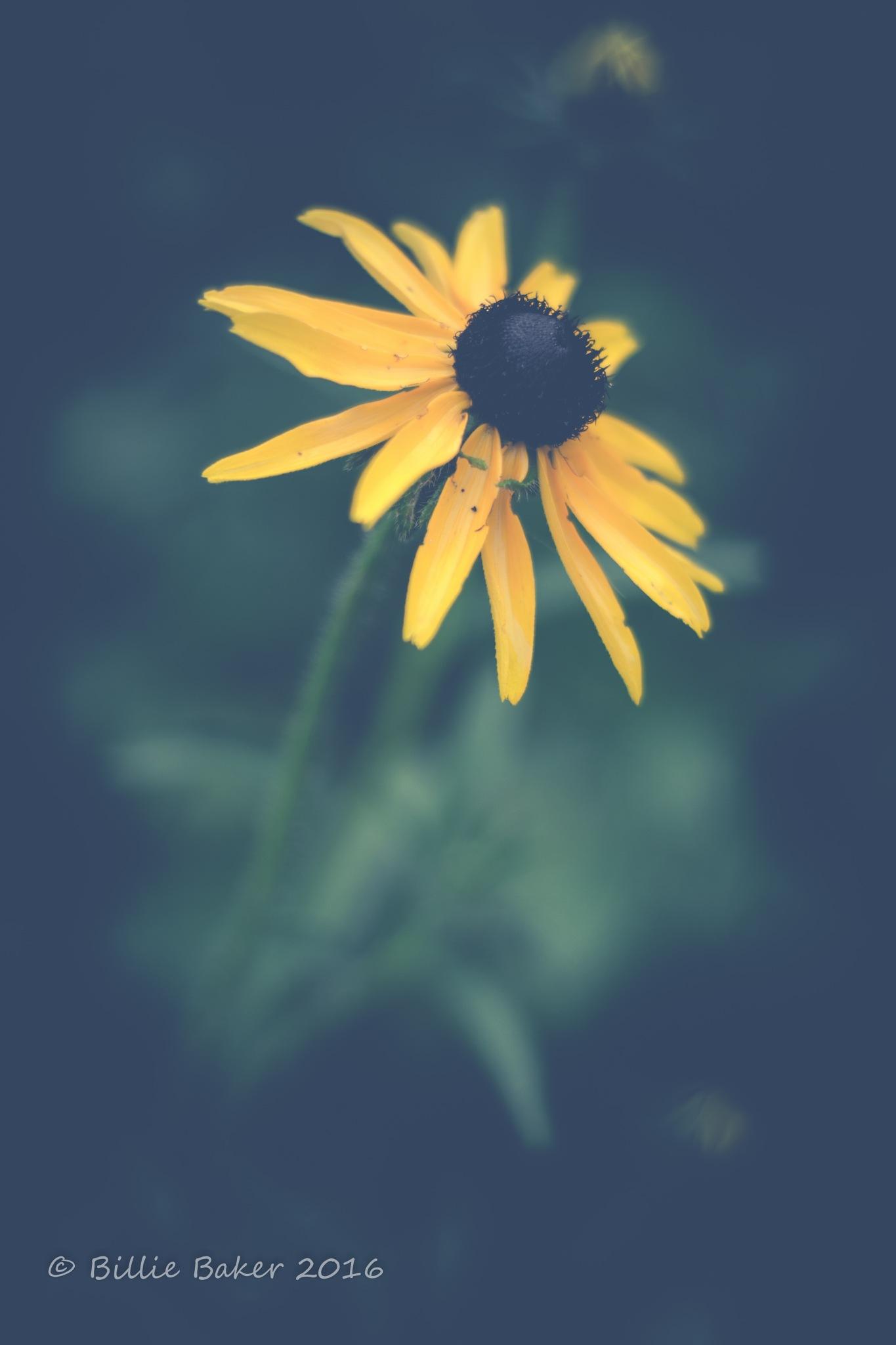 Yellow Flower by Billie Jo Baker