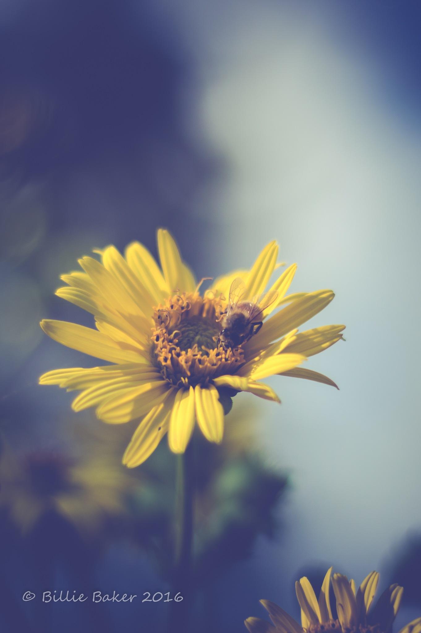 Busy Bee by Billie Jo Baker