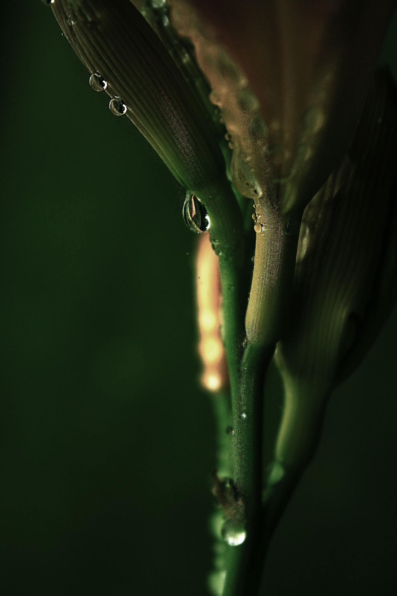 Raindrop by AnSophia
