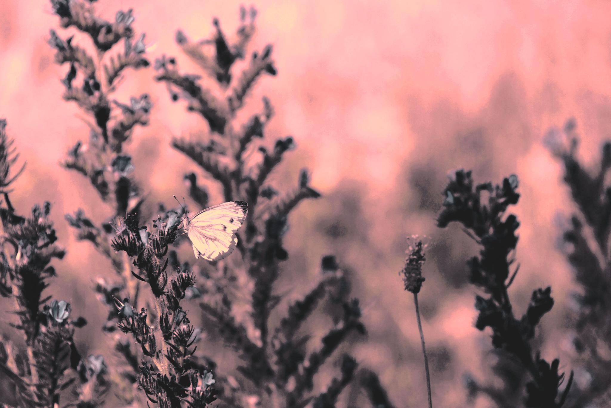 Summerseason by AnSophia