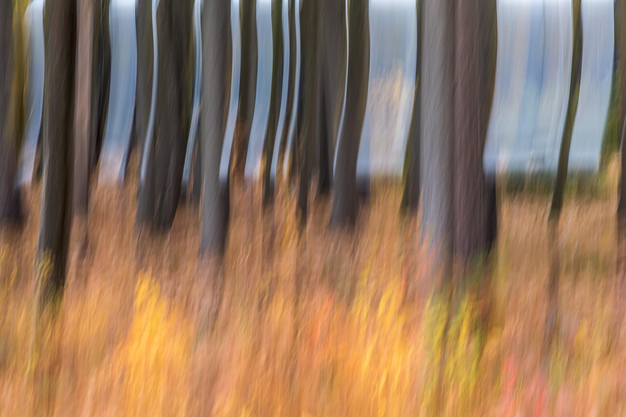 Autumn Abstract by lisalettieri5