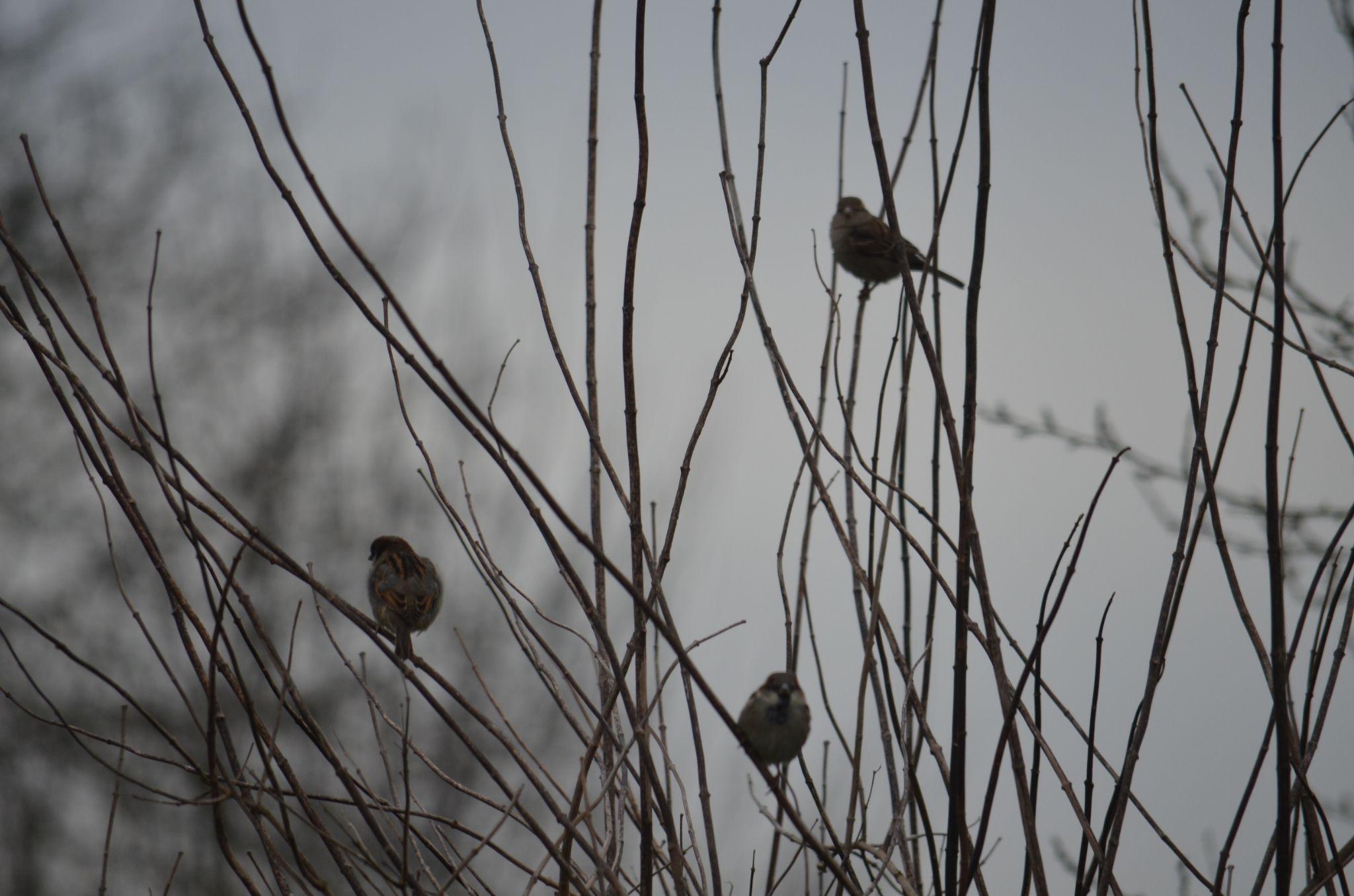Un matin brumeux by ormessahondra