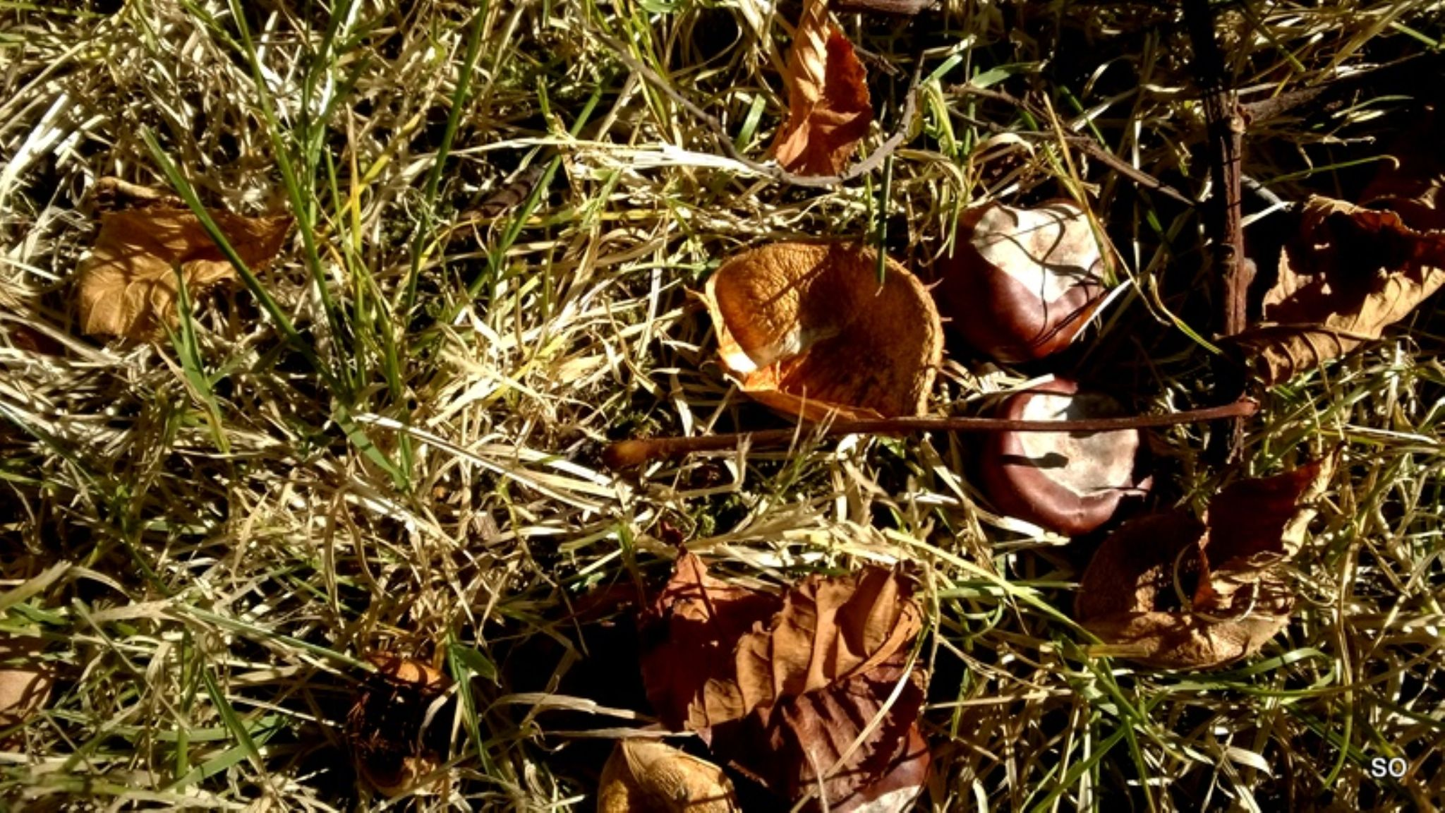 automn leaves by ormessahondra