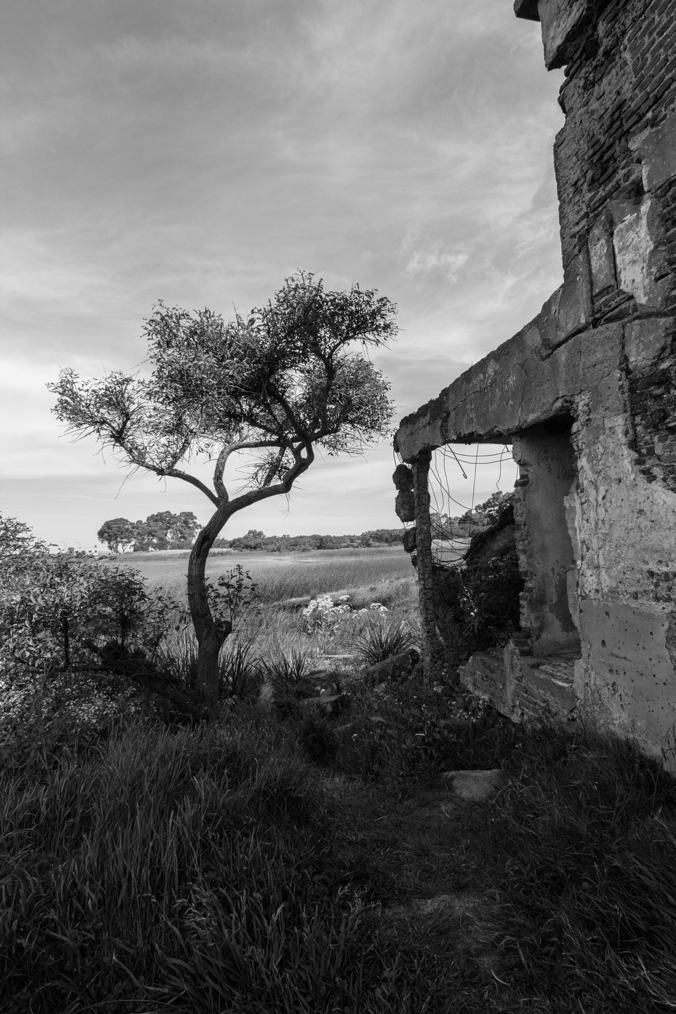 Ceibo entre ruinas by Andrés Miñones