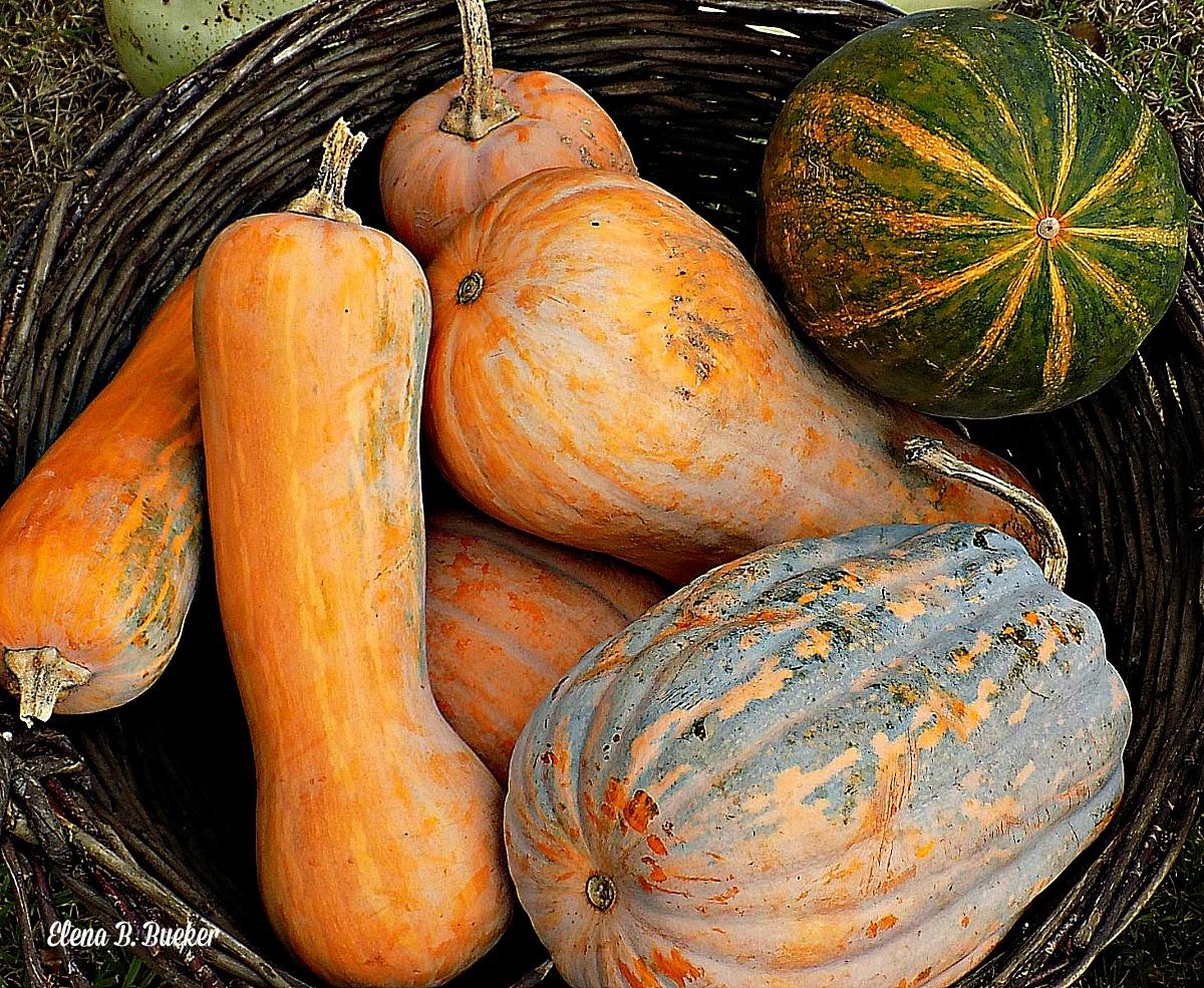 Pumpkins by elena.b.bueker