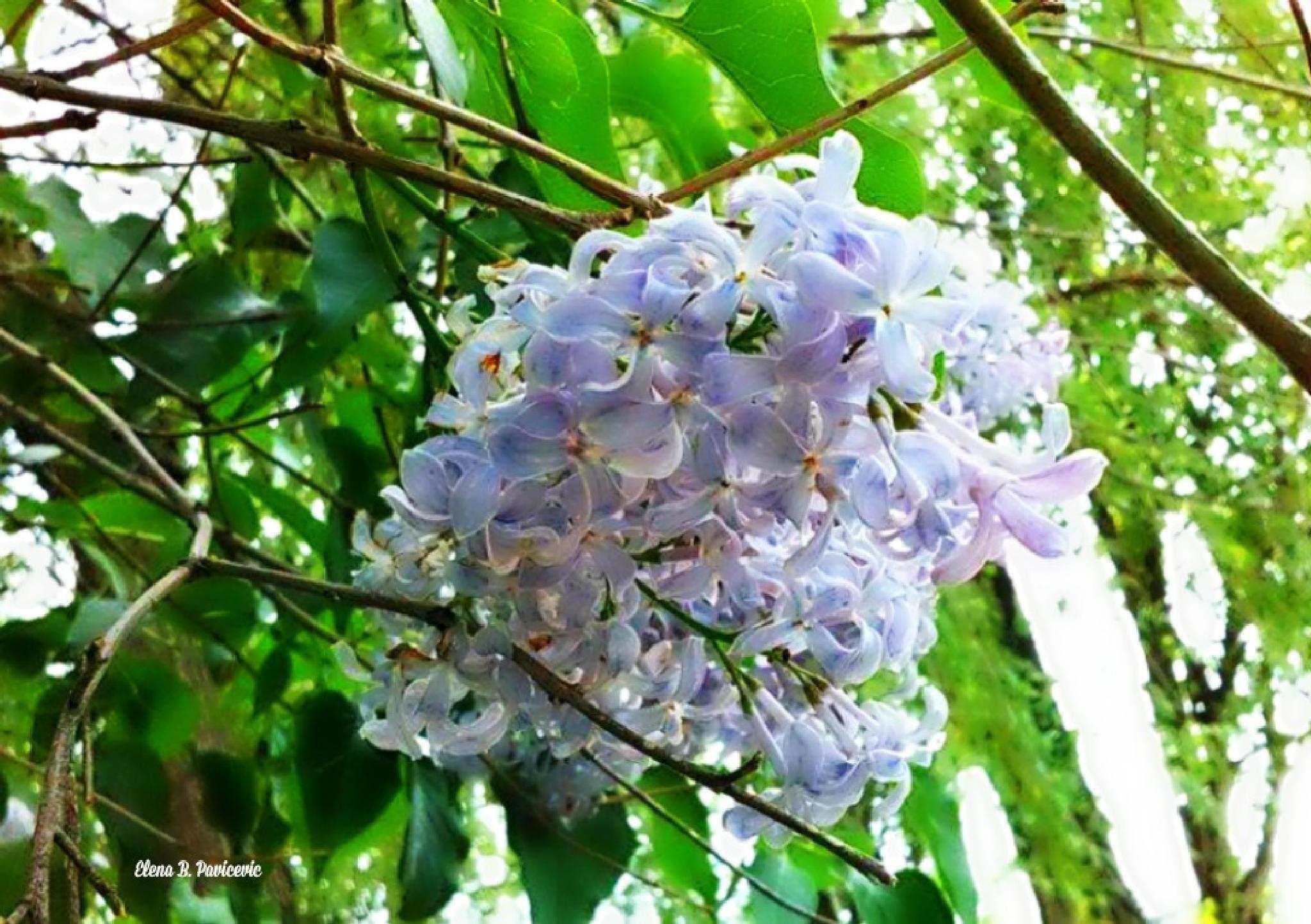 Purple Flowers by elena.b.bueker