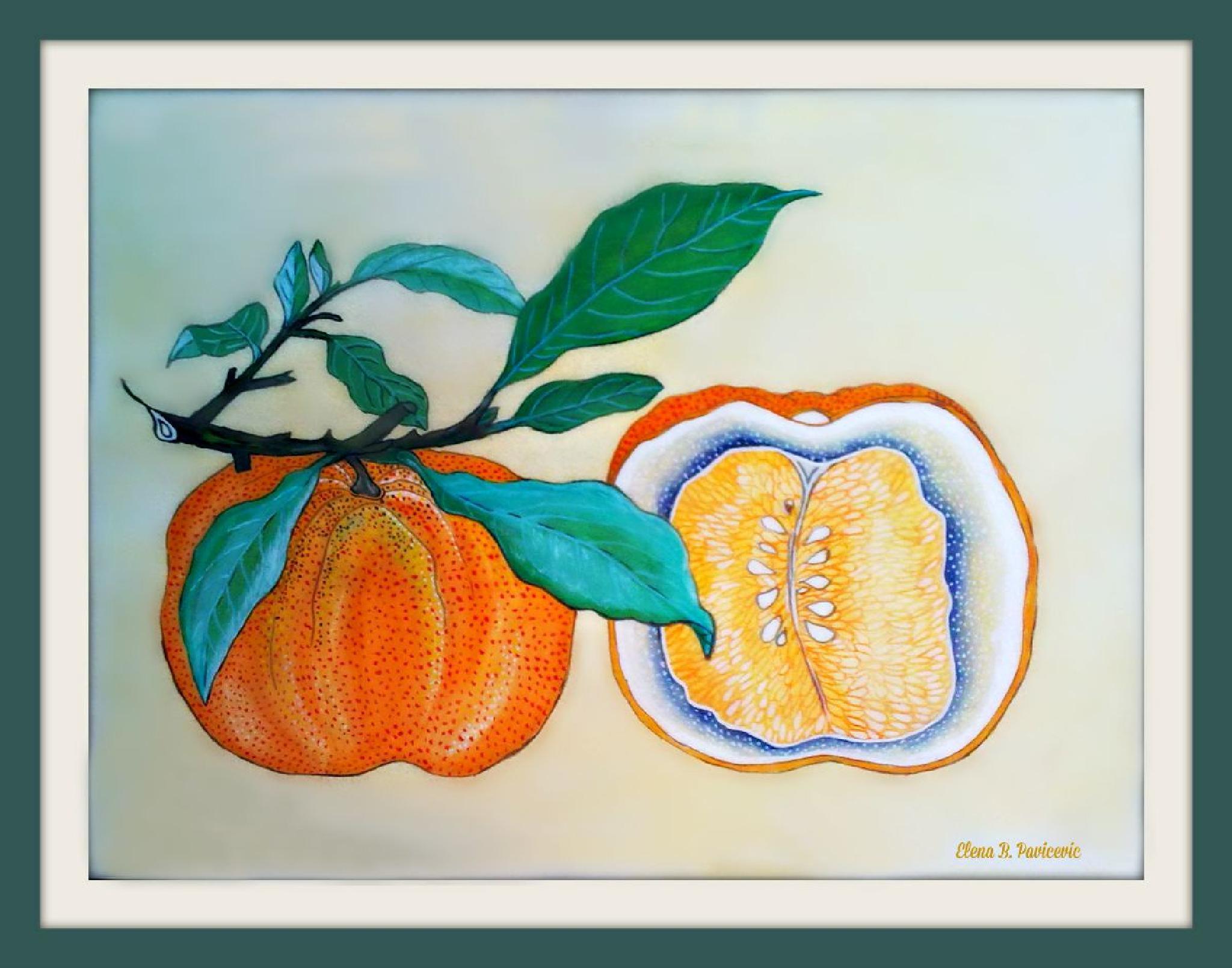 Tangerine by elena.b.bueker