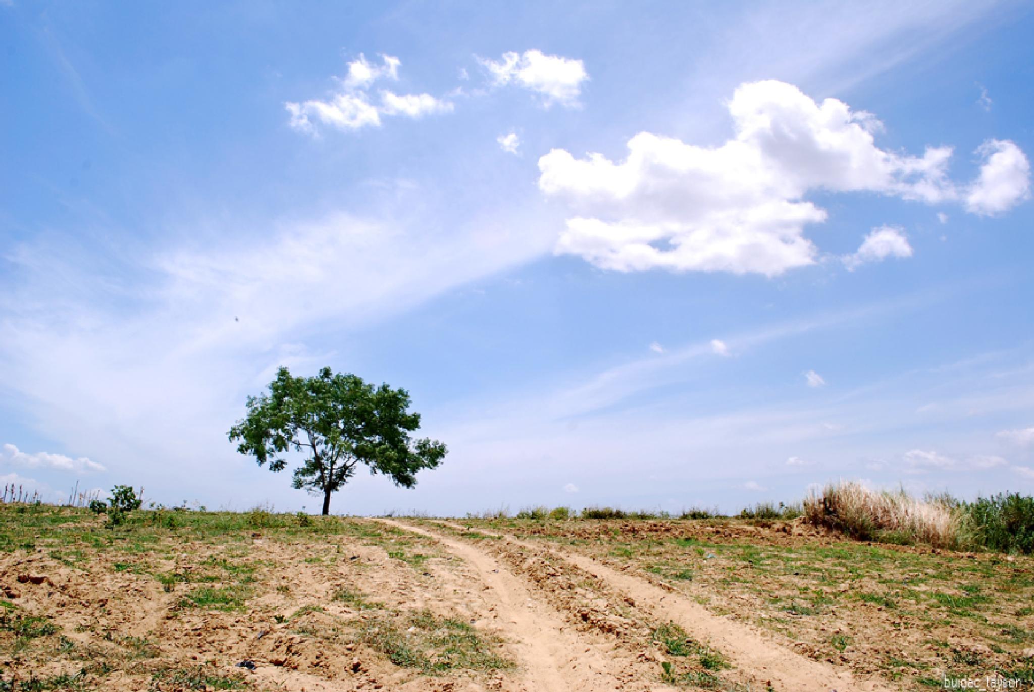 Alone by buidacninh