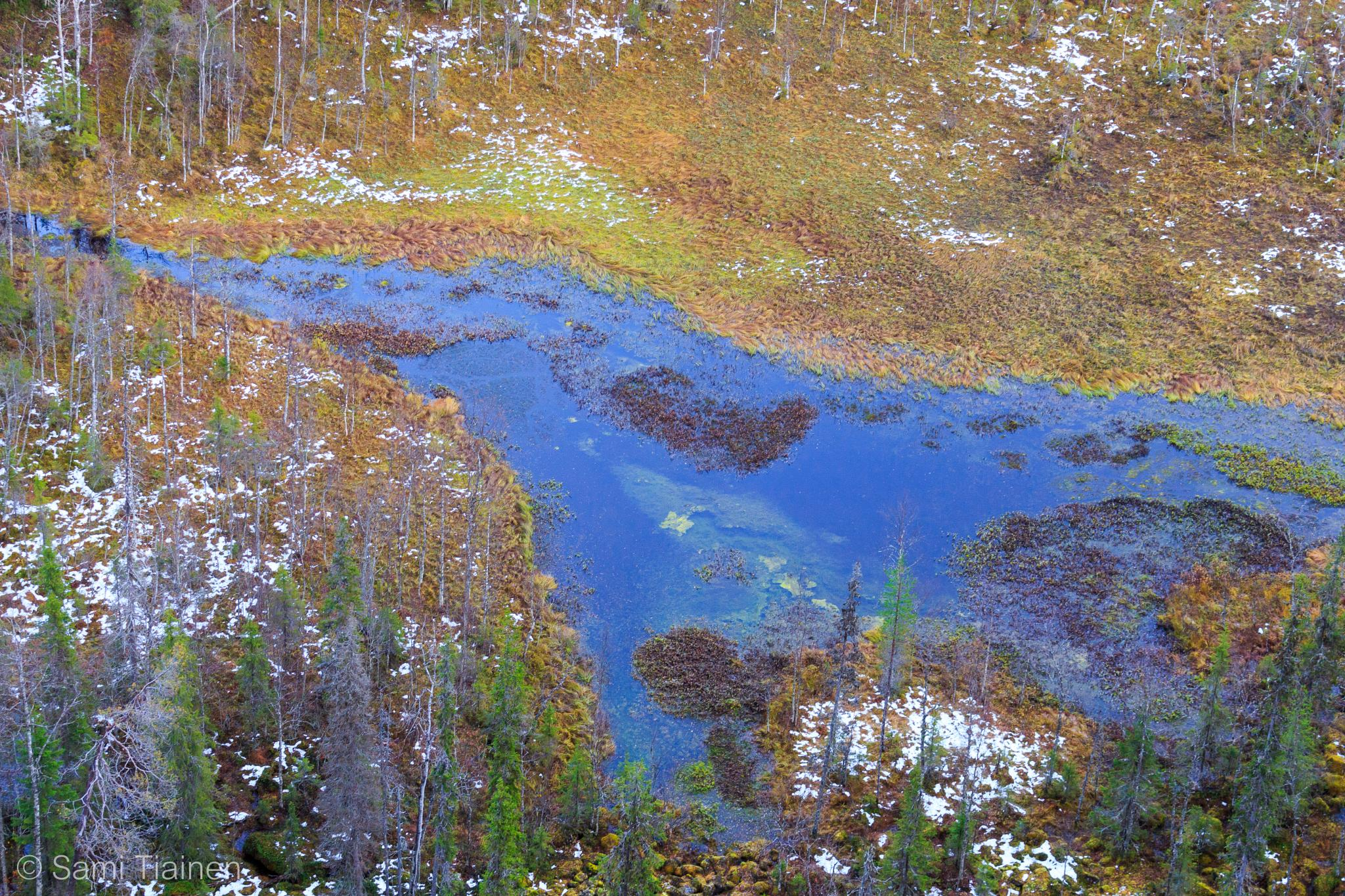Colourful swamp by Sami Tiainen