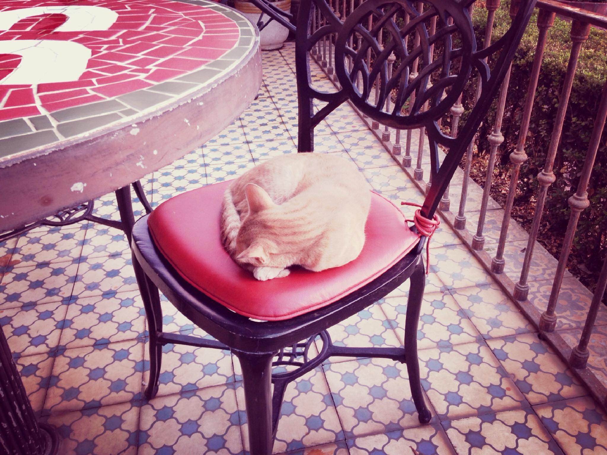 Im sooooo tiredZZzzzZzzz by monica_photo