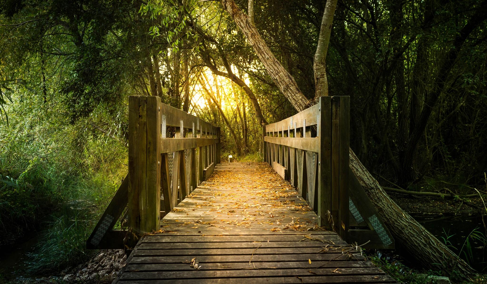 Ponte Encantada by Da Costa Photography