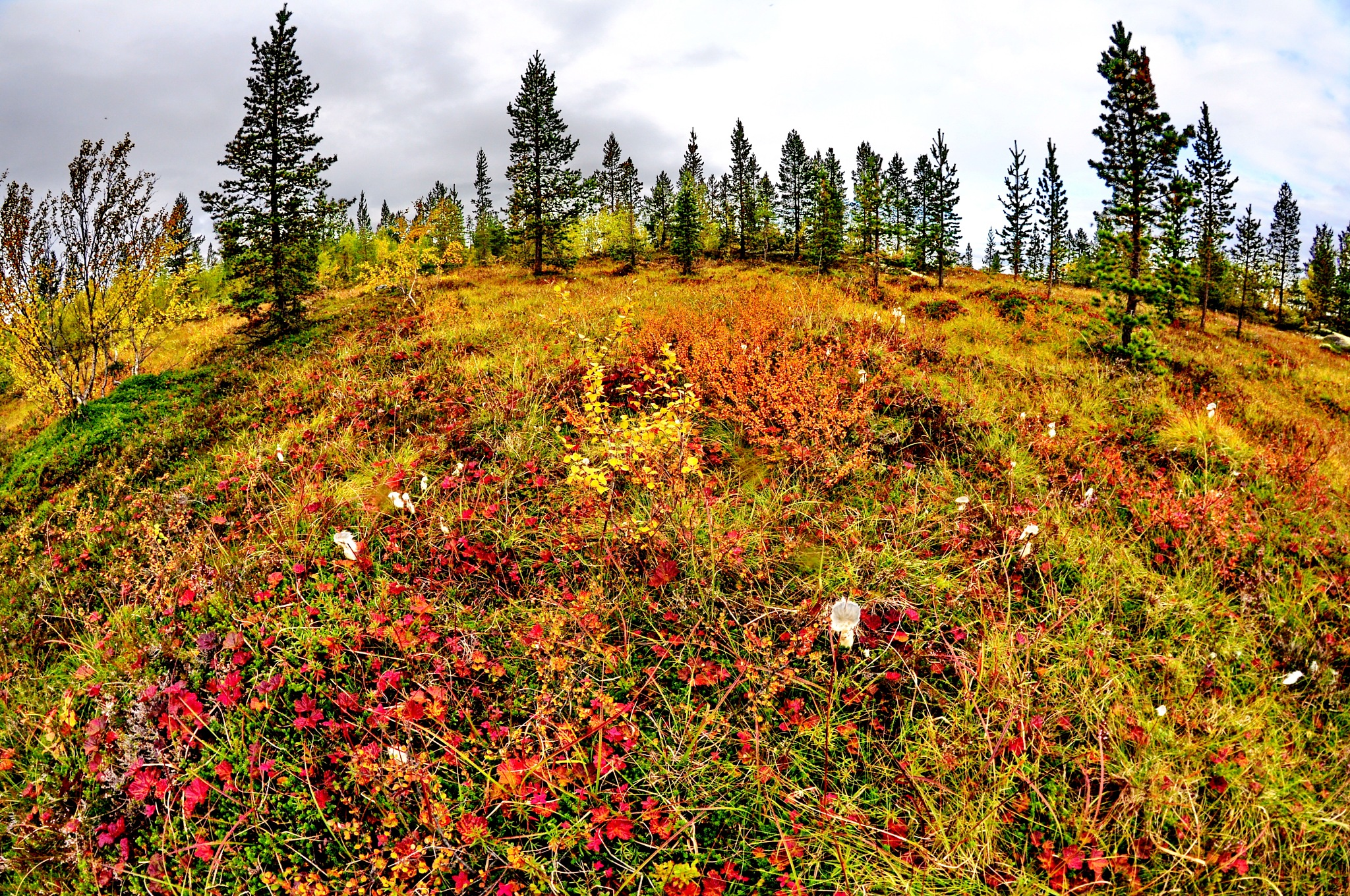 Murmansk, the autumn by vadsever58