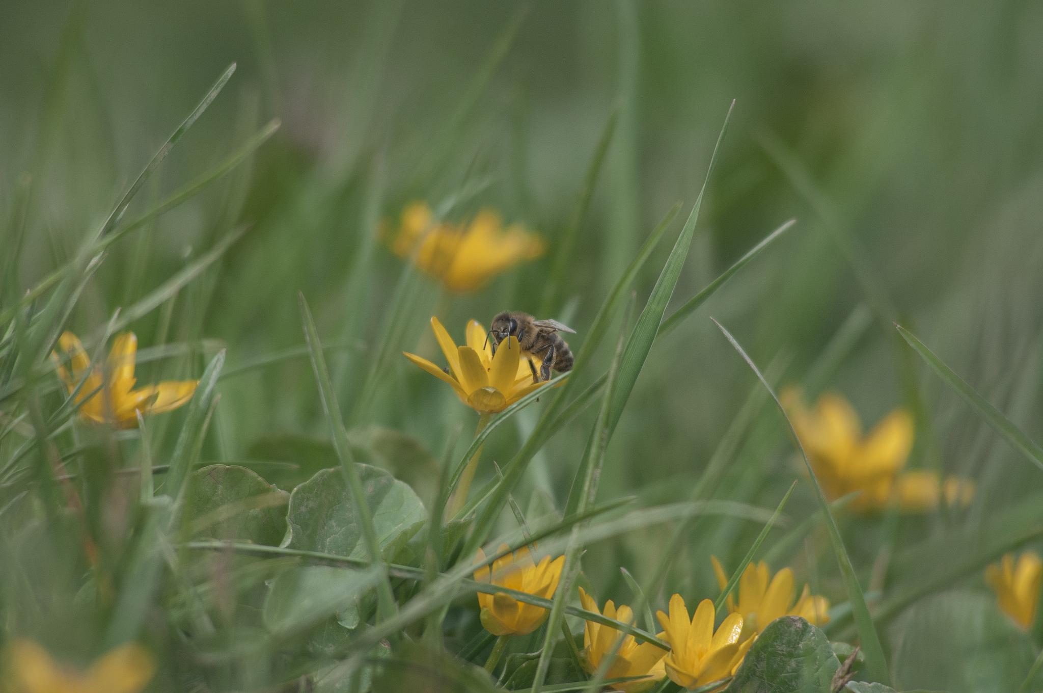 Bee by Homoki Gabi