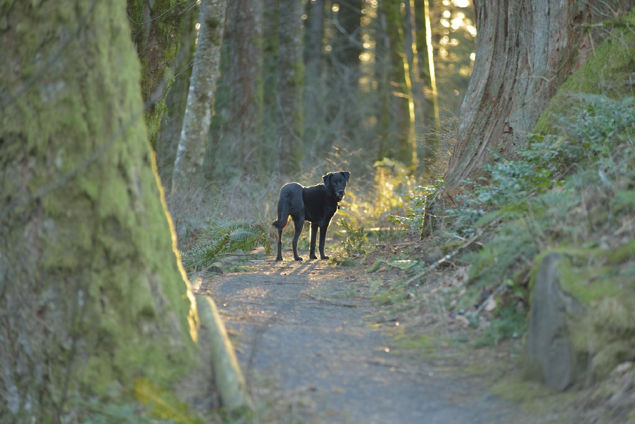 Wonder Dog by Leback