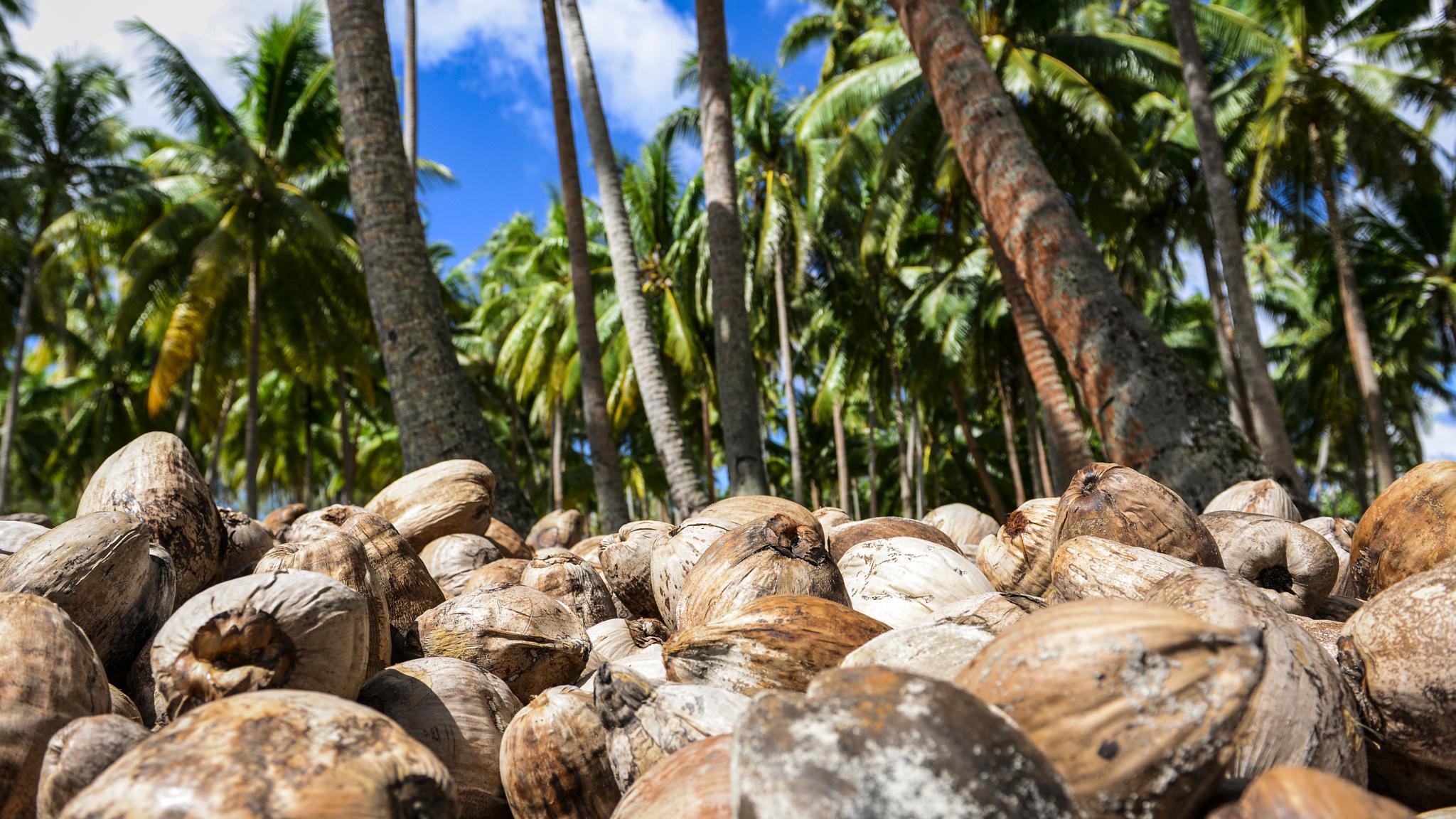 Coconut by Thomas Hubener