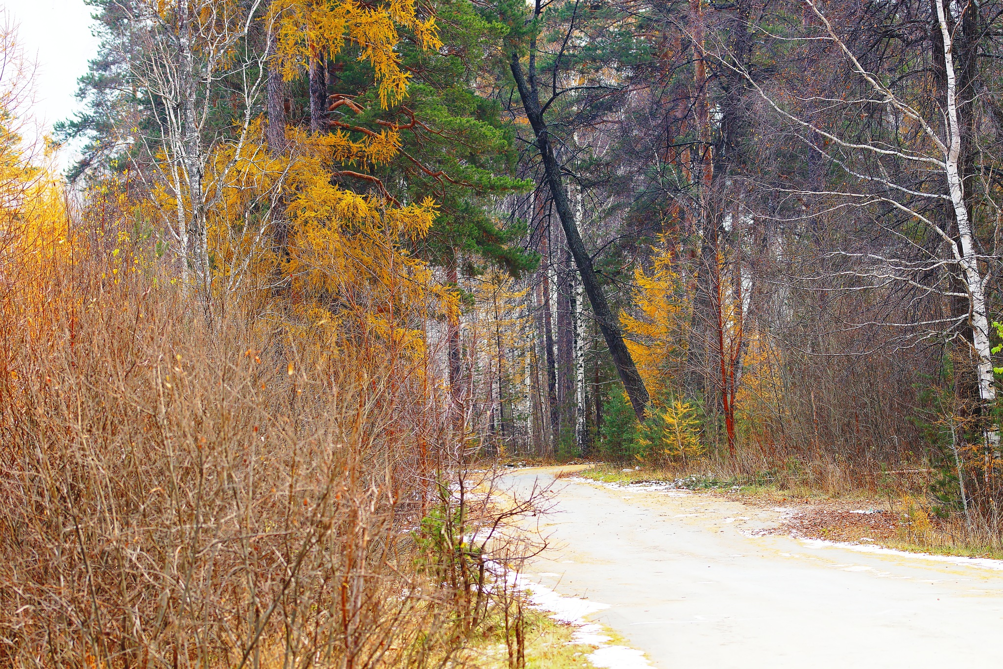 Road to fall by sergey.parfeniuk