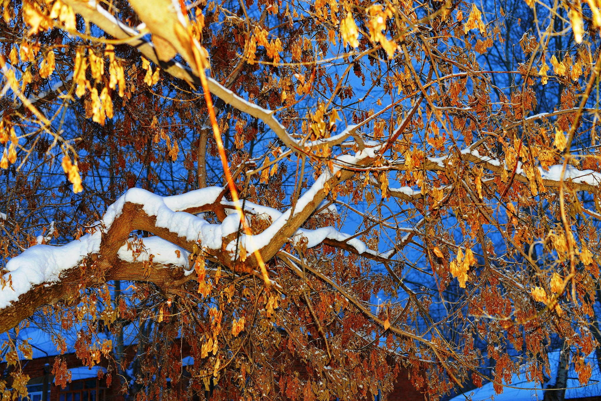 White and Yellow by sergey.parfeniuk