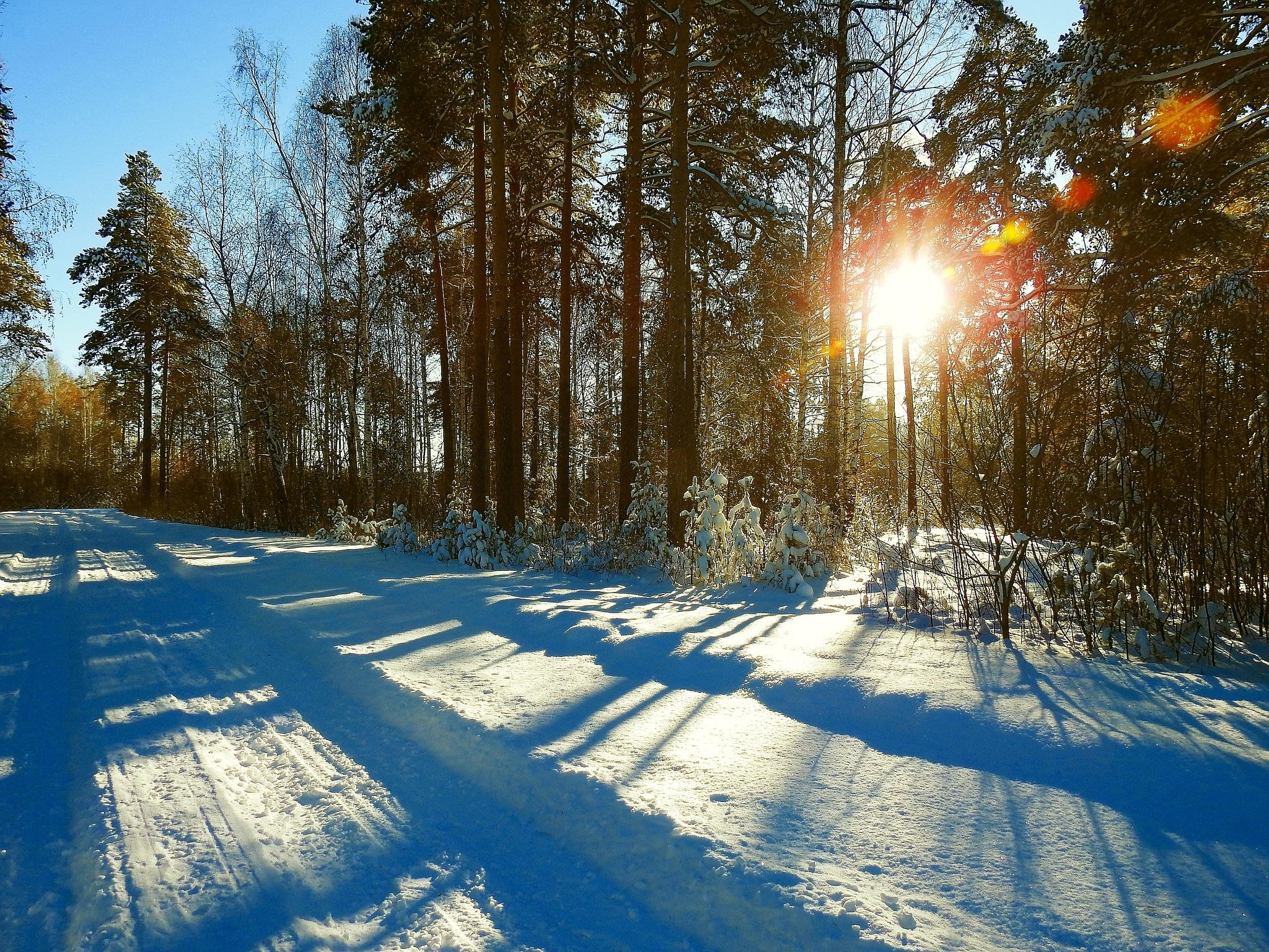 Sunshine by sergey.parfeniuk