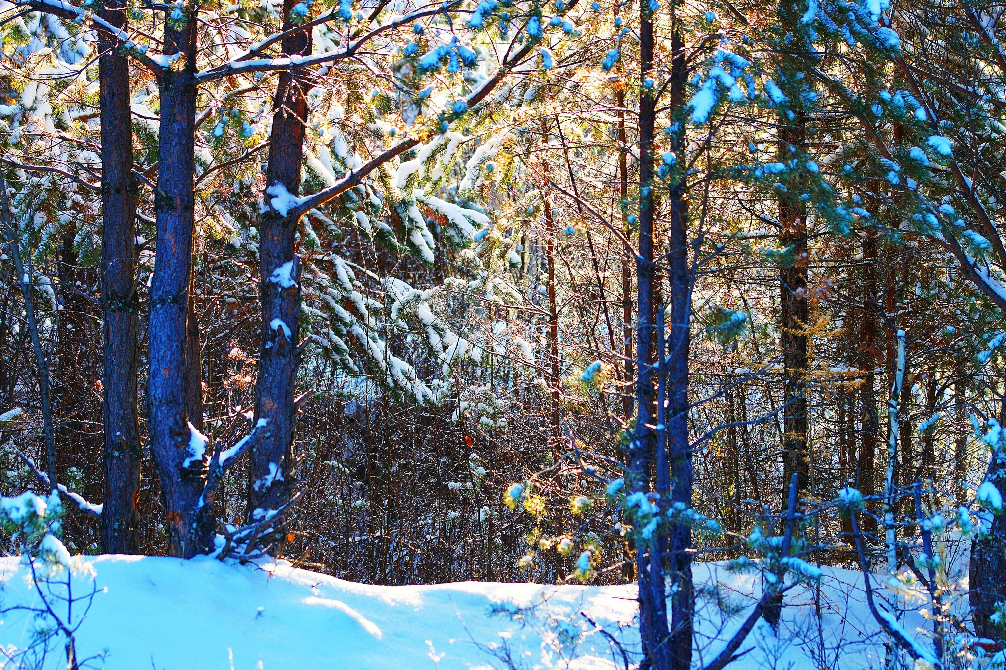 November Wood by sergey.parfeniuk