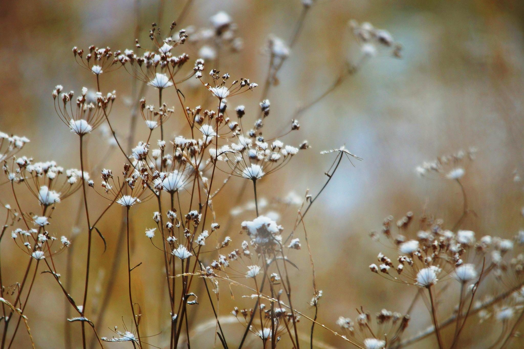 Snow flowers by sergey.parfeniuk