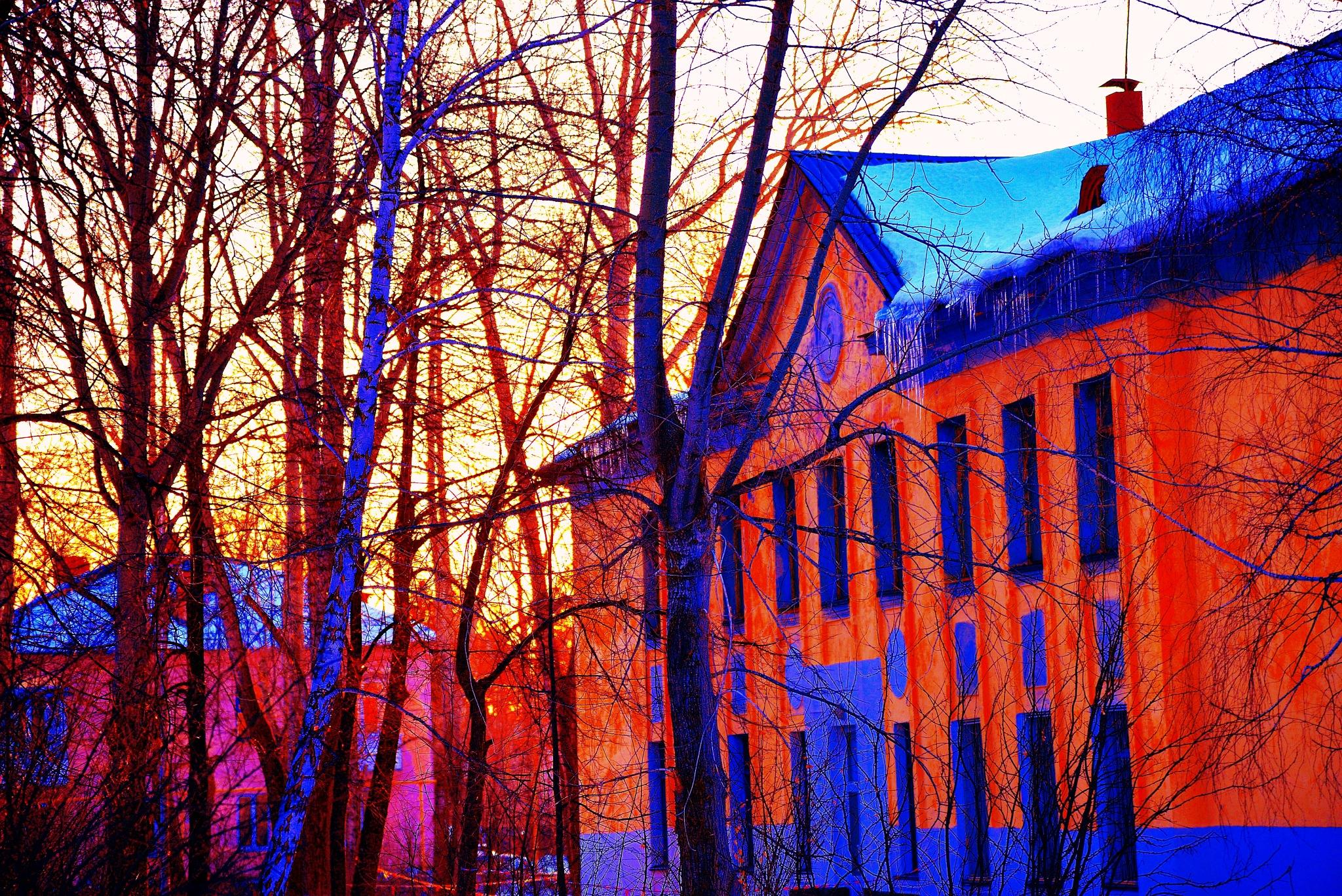 Melodies of Trees by sergey.parfeniuk