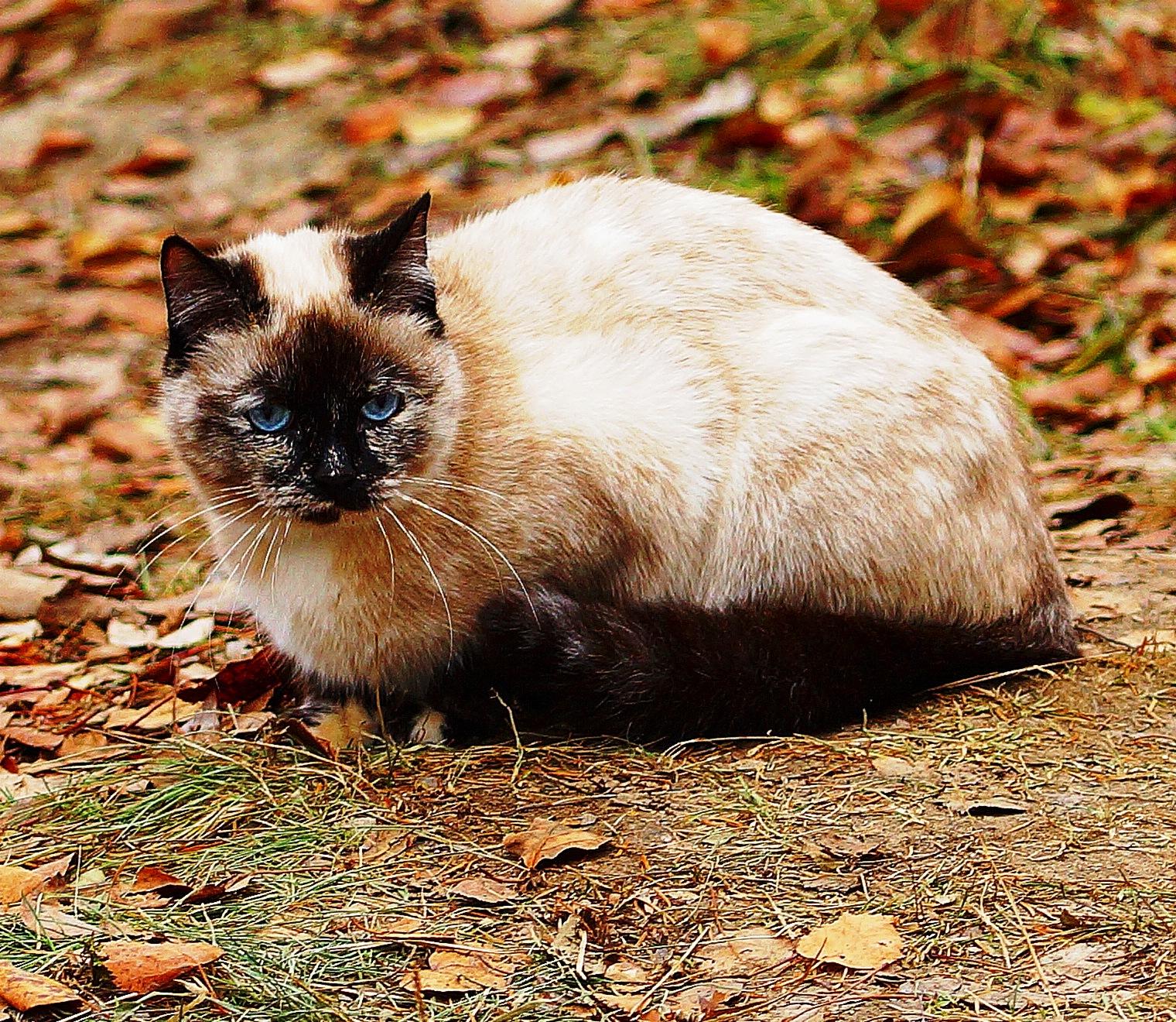 Nice cat  by sergey.parfeniuk