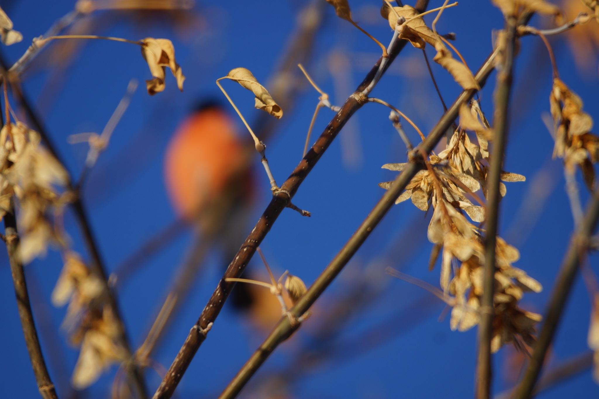 Leaves  by sergey.parfeniuk