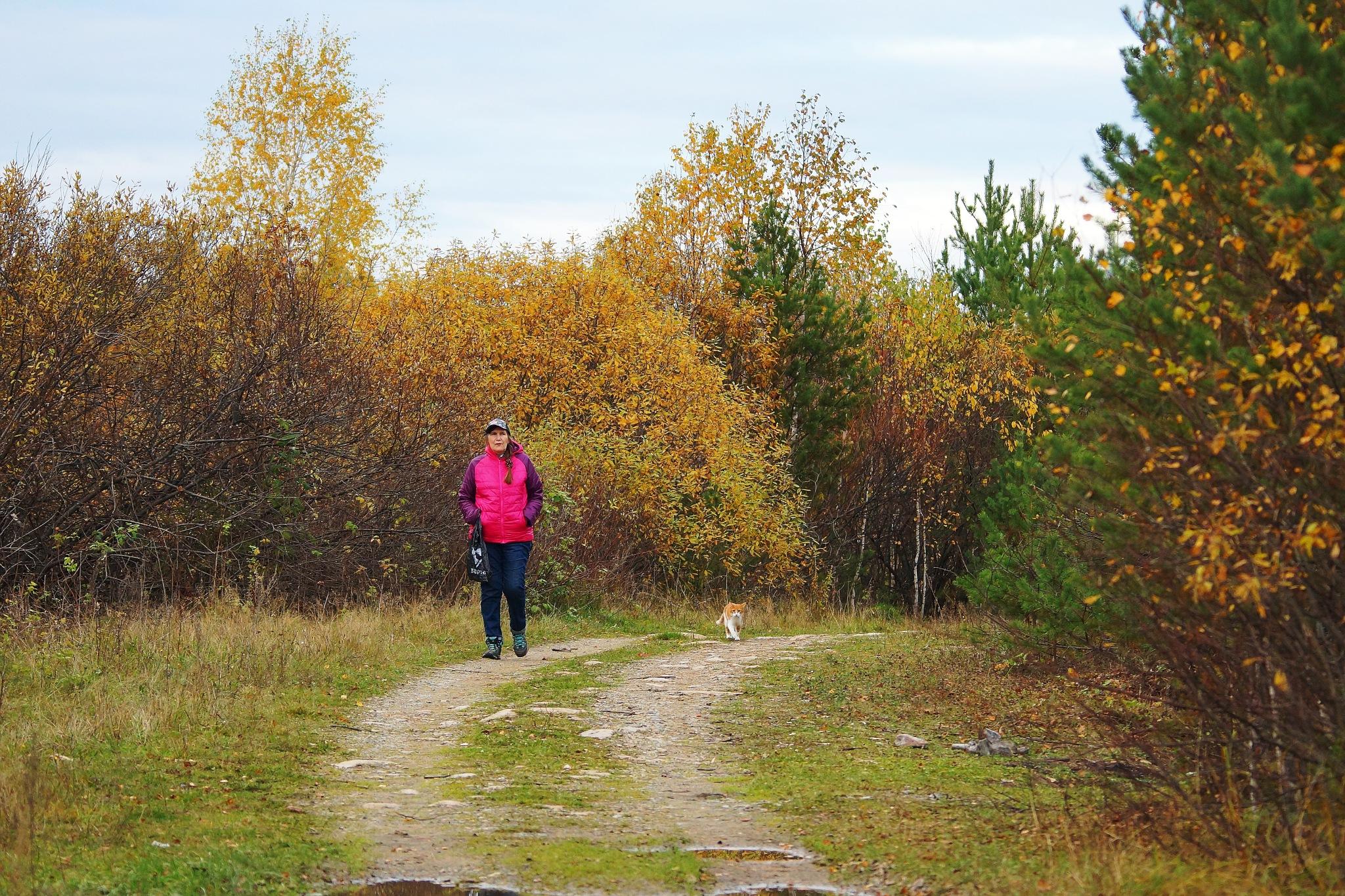 Forest roads by sergey.parfeniuk