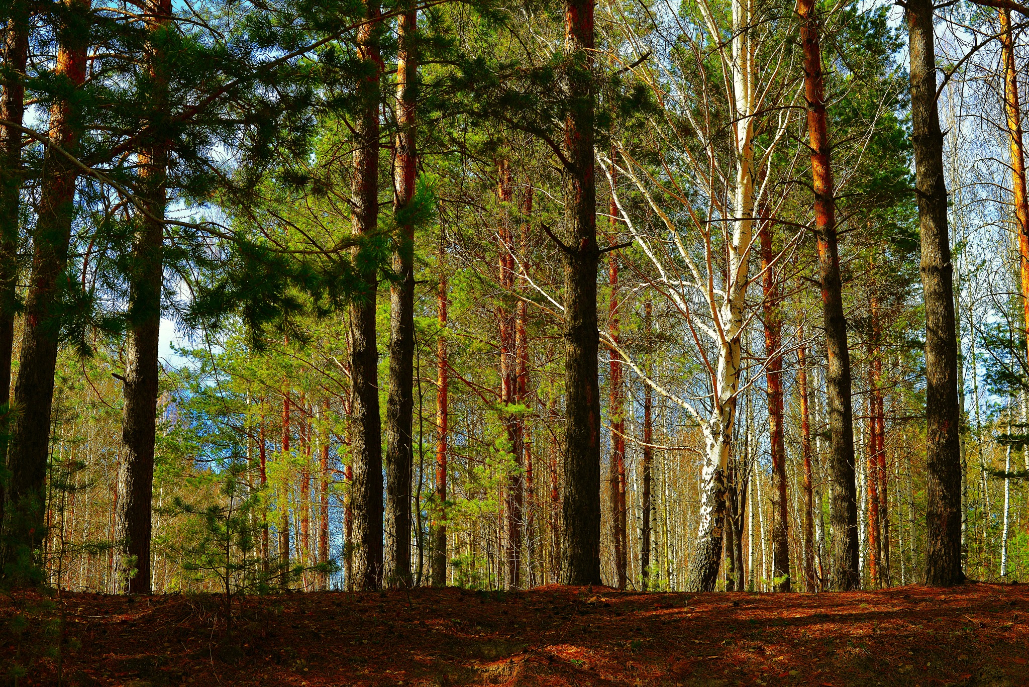 May wood by sergey.parfeniuk