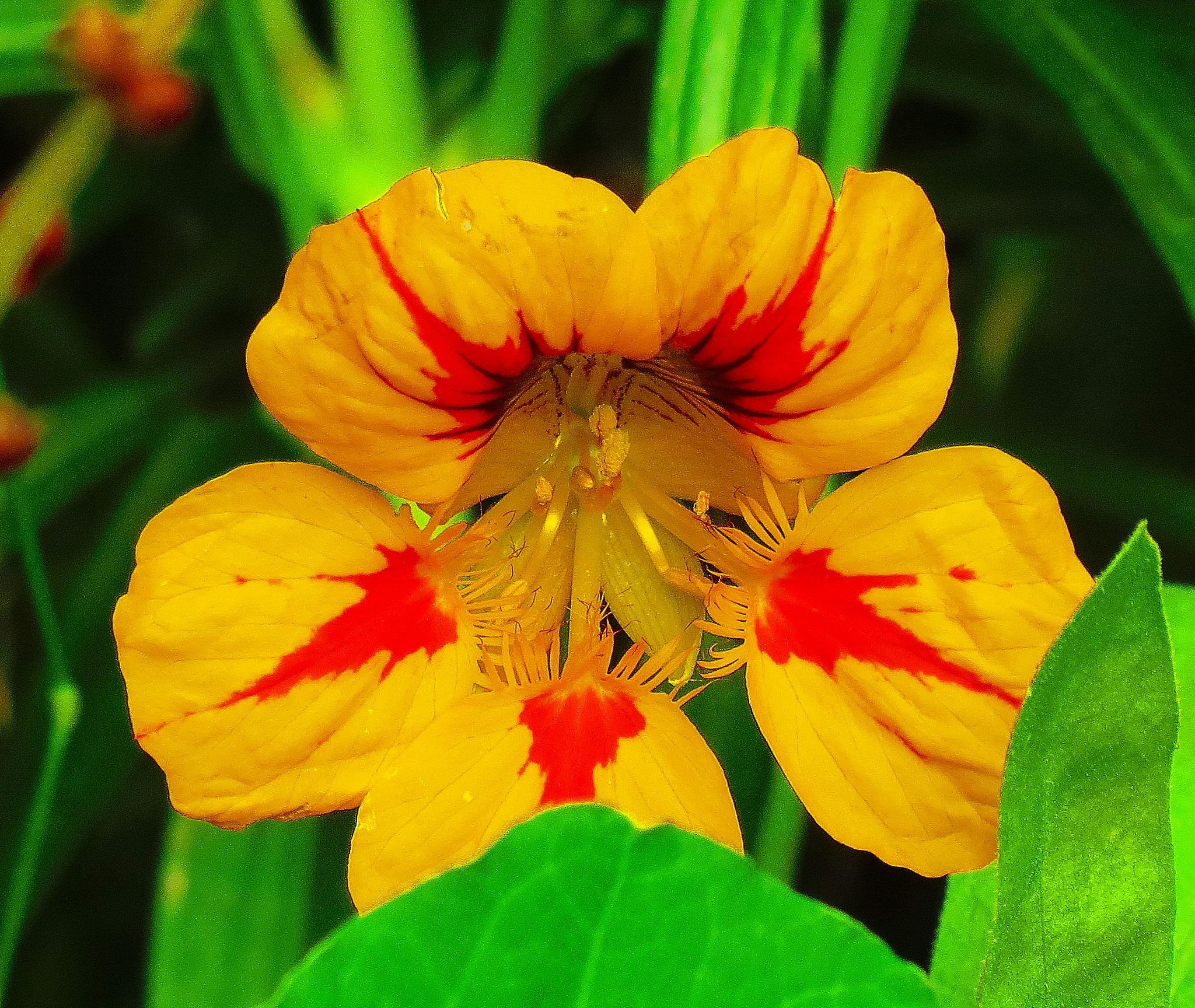 Flower of Fall by sergey.parfeniuk