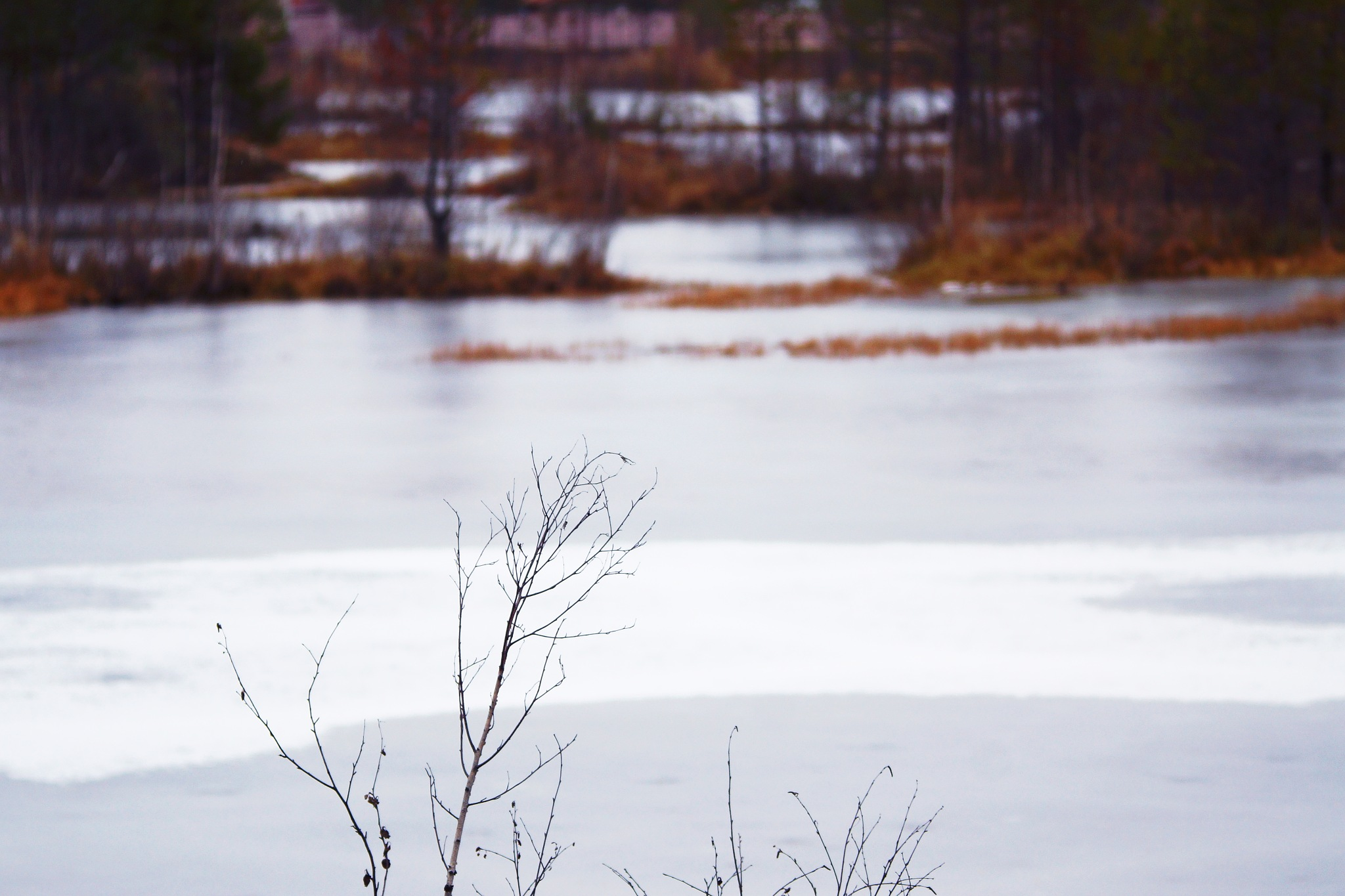 Glossy Ice  by sergey.parfeniuk