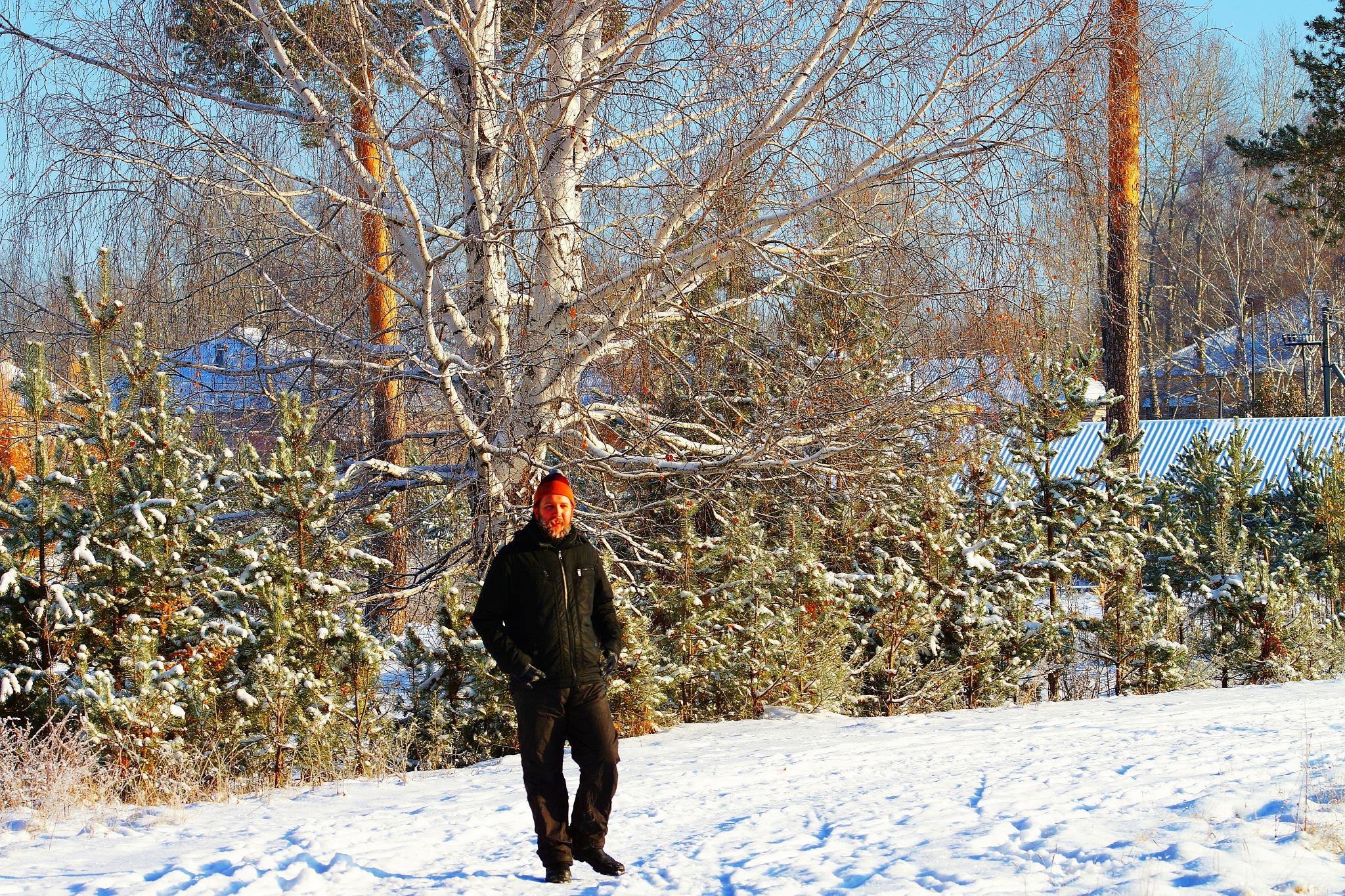 At the Birch  by sergey.parfeniuk