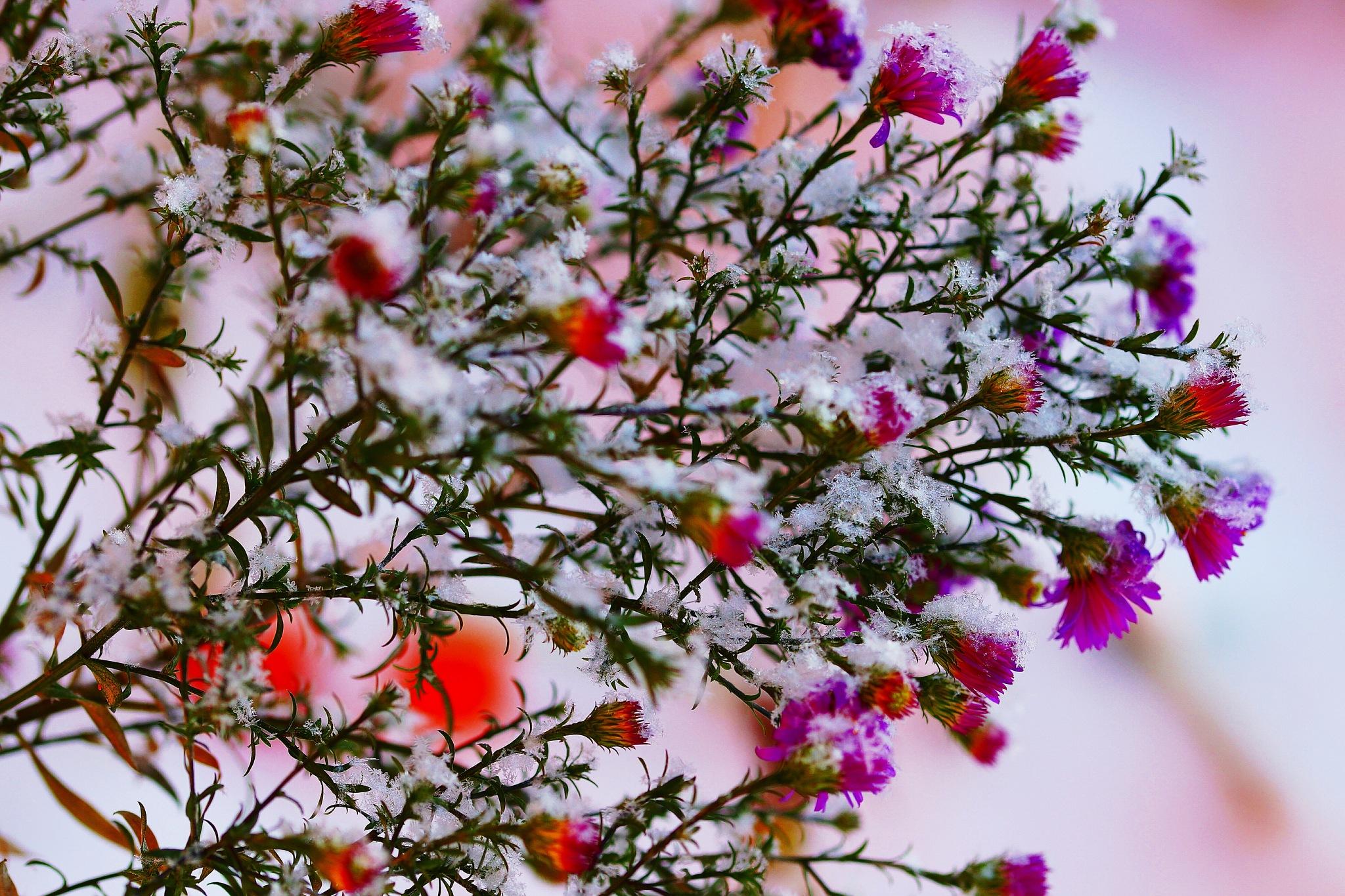 Street Flowers  by sergey.parfeniuk