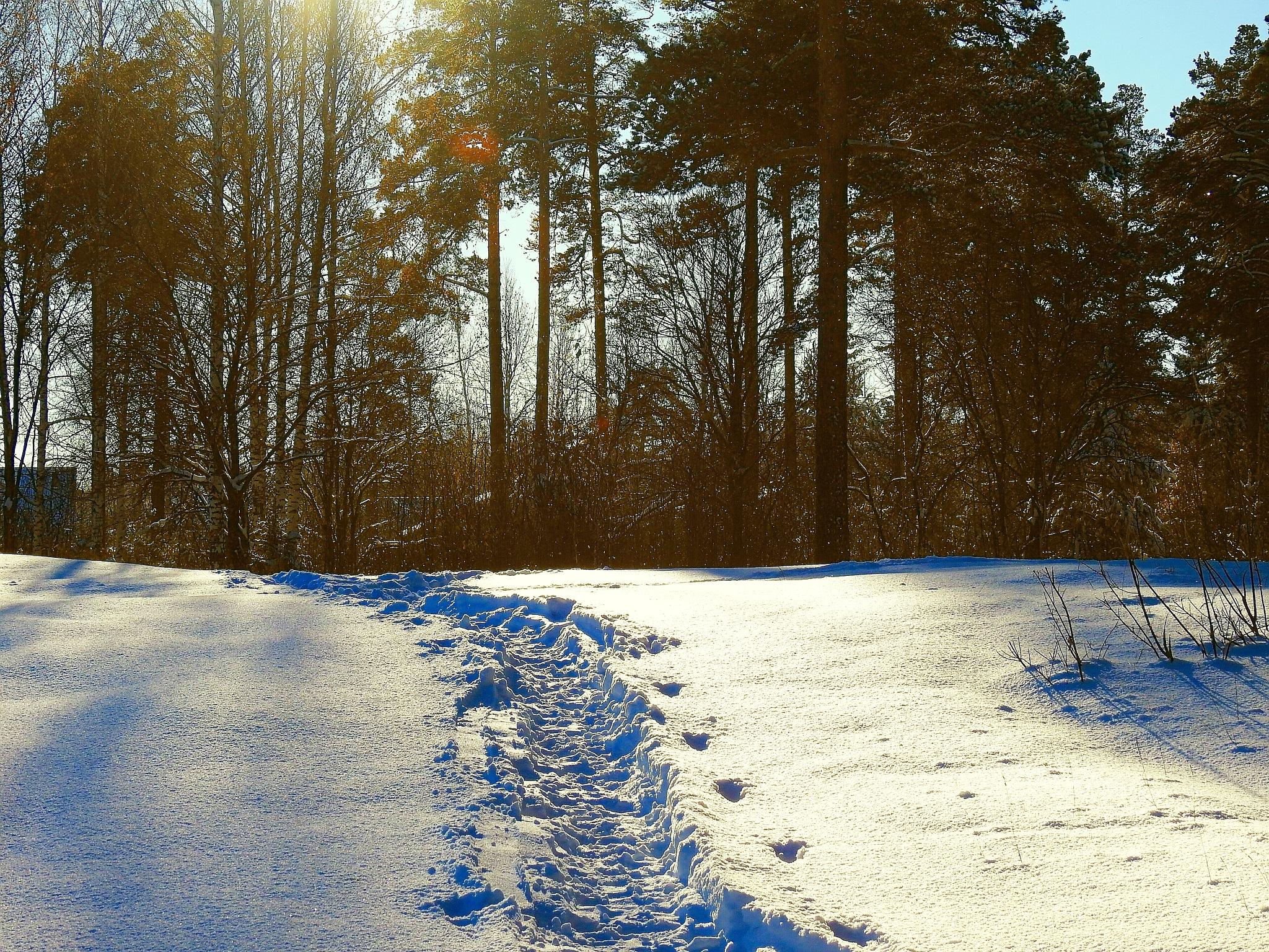 Light of the Sun on Snow by sergey.parfeniuk
