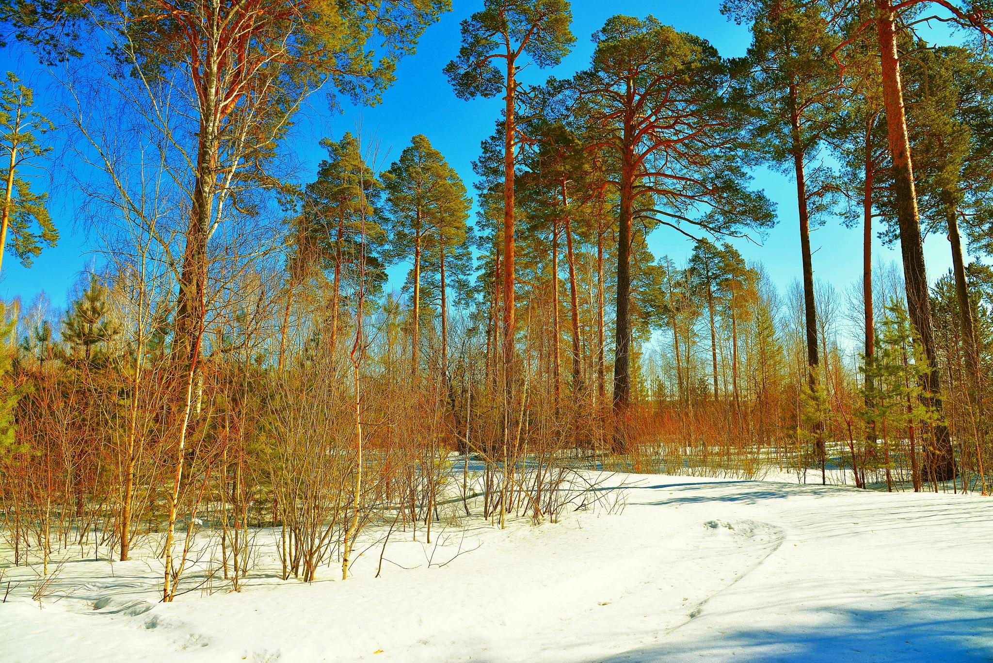 Forest Motive  by sergey.parfeniuk