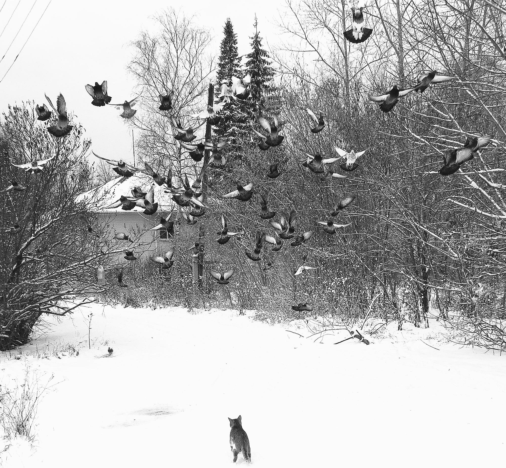 Flight of Pigeons by sergey.parfeniuk