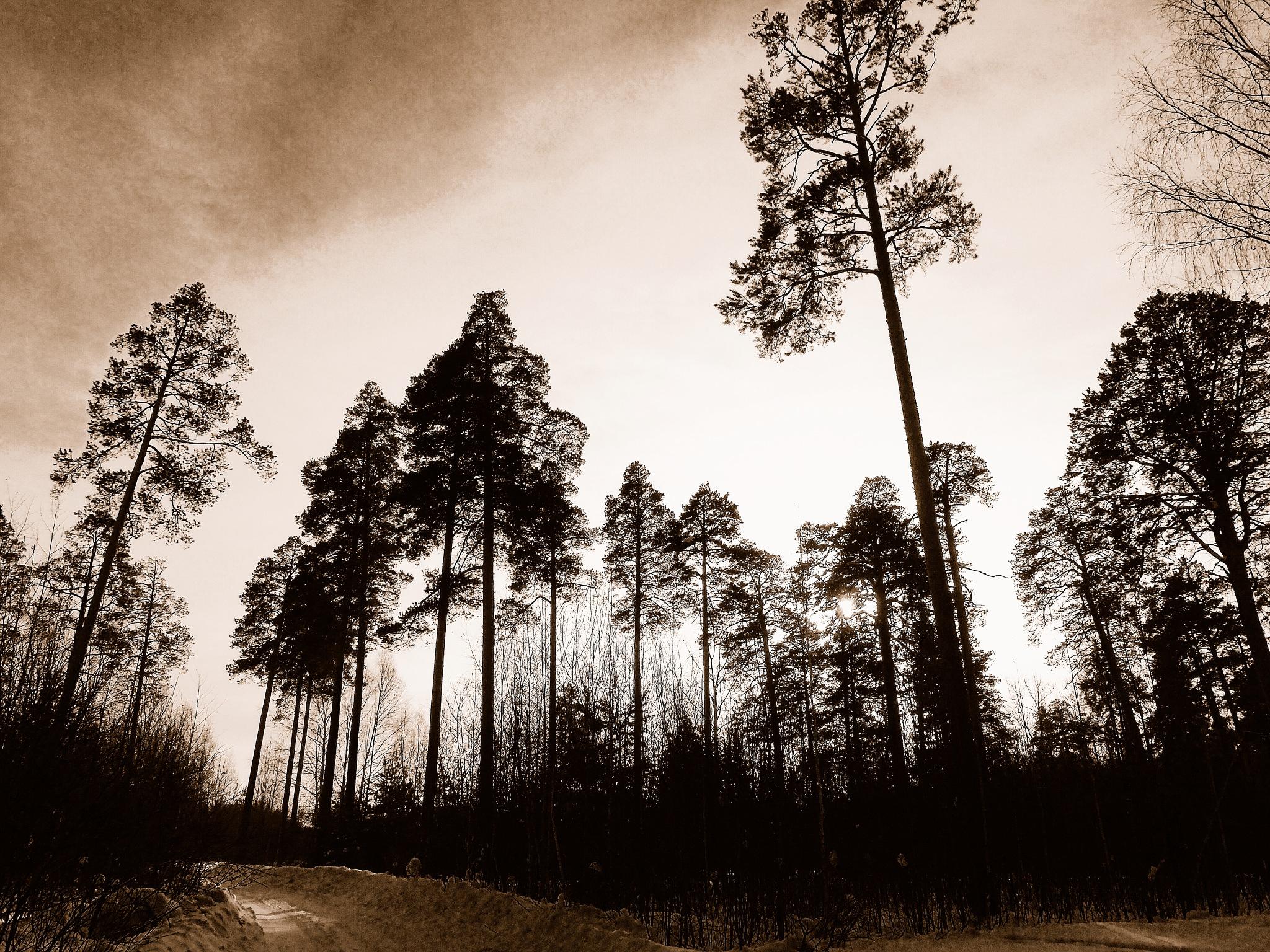 Silhouettes by sergey.parfeniuk